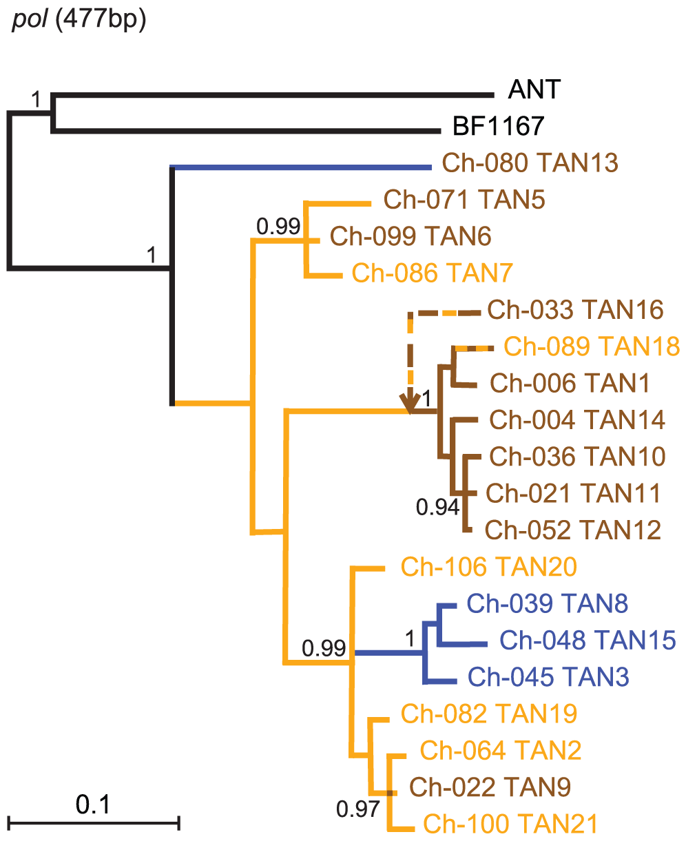 Phylogeny of SIVcpz in Gombe.