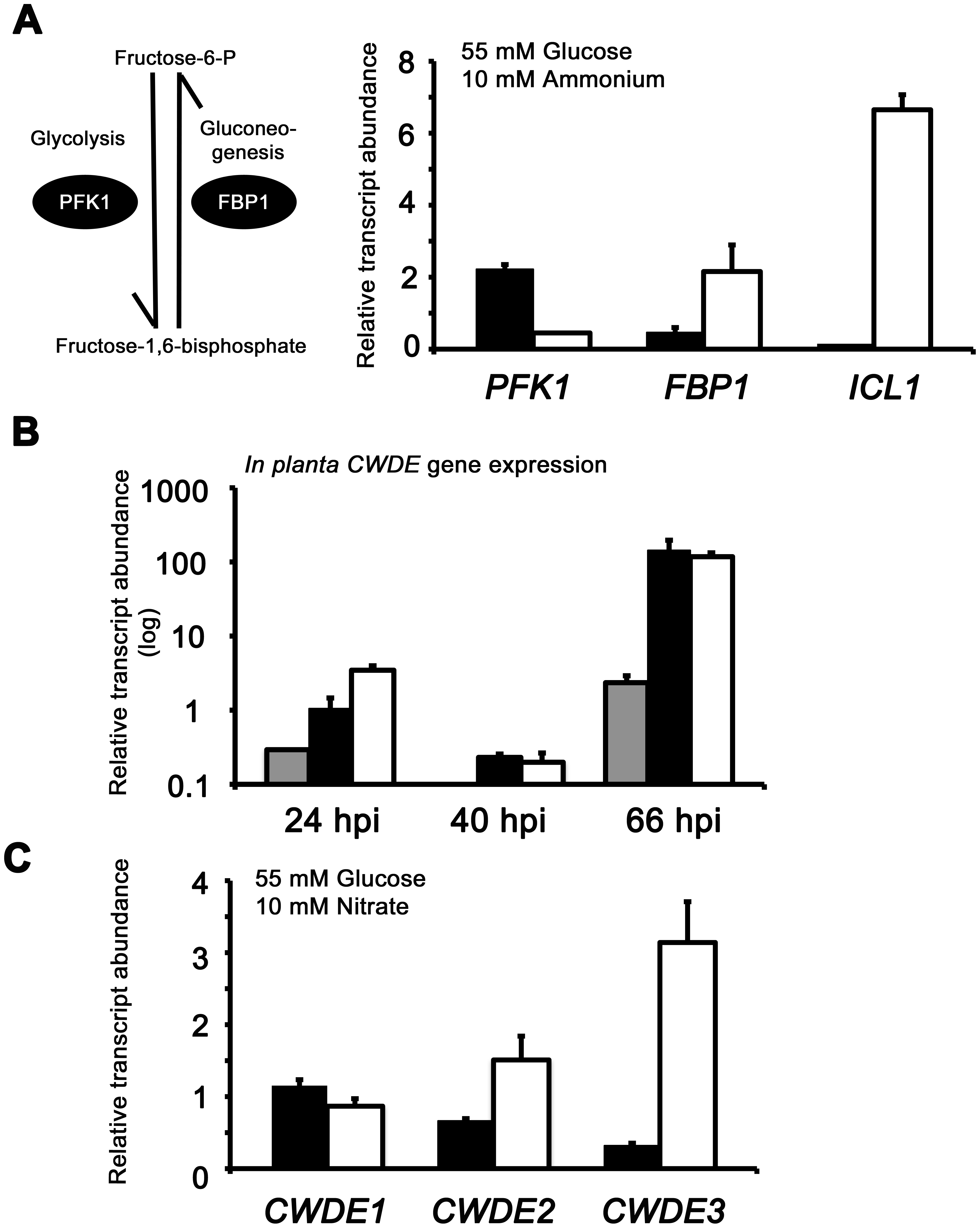 Inactivating CCR in Δ<i>tps1</i> strains results in the misregulated expression of genes for assimilating glucose and metabolizing alternative carbon sources.