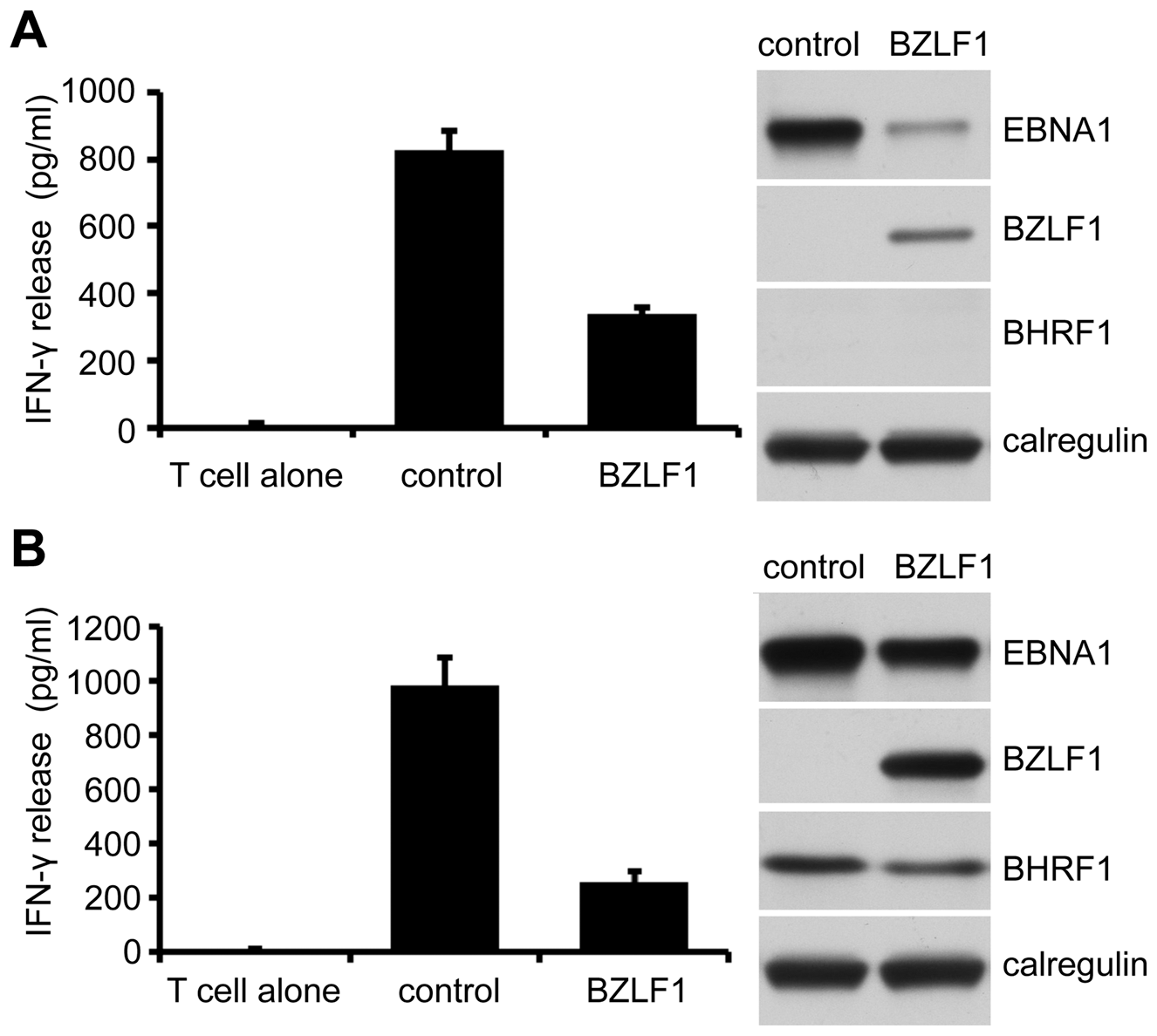 Inhibition of CD4<sup>+</sup> T cell recognition by BZLF1 is retained when toxicity is reversed by BHRF1.