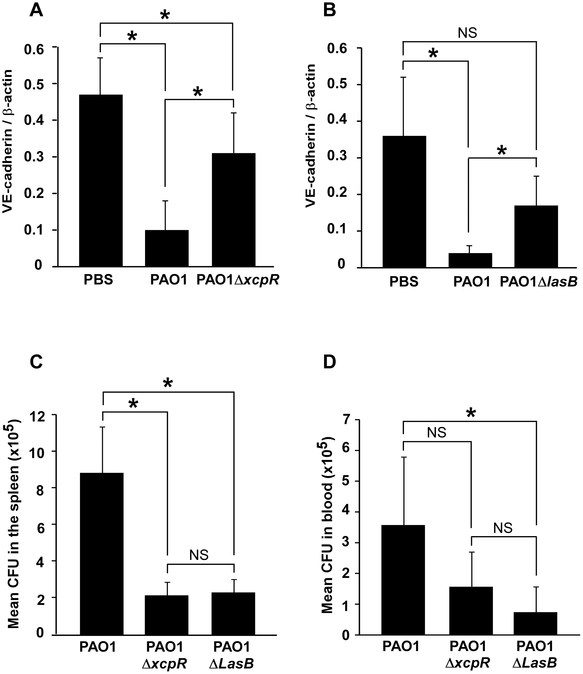 Decreased VE-cadherin levels in mouse acute pneumonia correlated with increased dissemination.