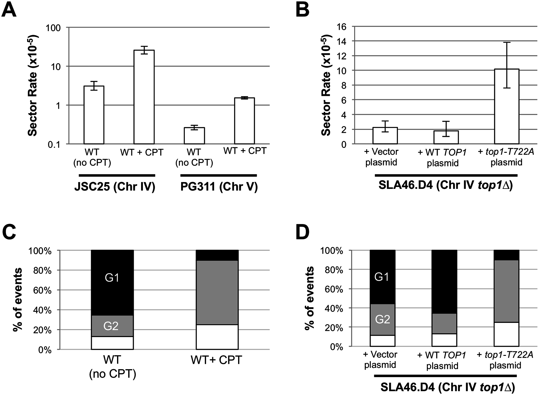 CPT treatment and Top1-T722A expression increase RCOs during or after DNA synthesis.