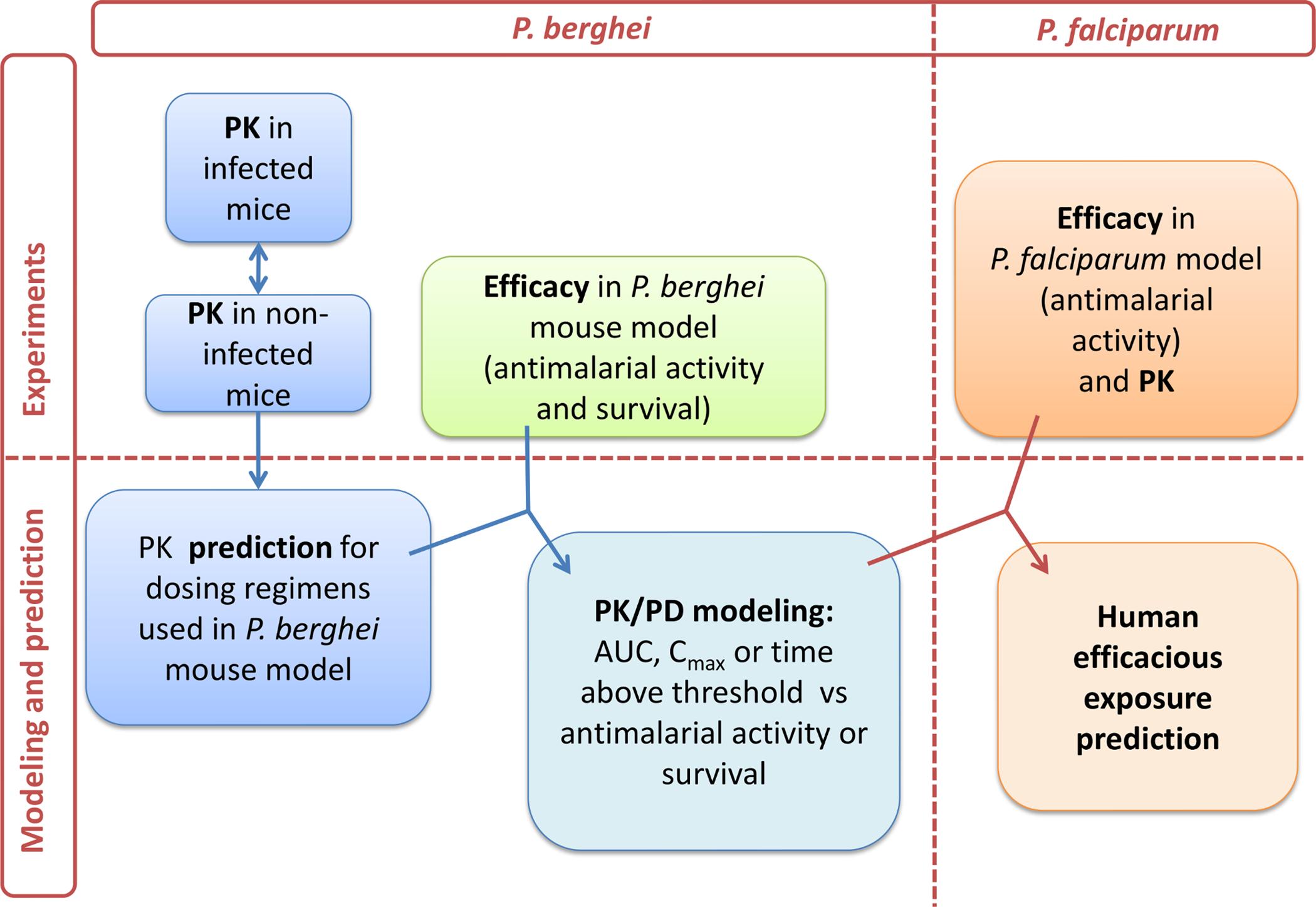 PK/PD strategy.