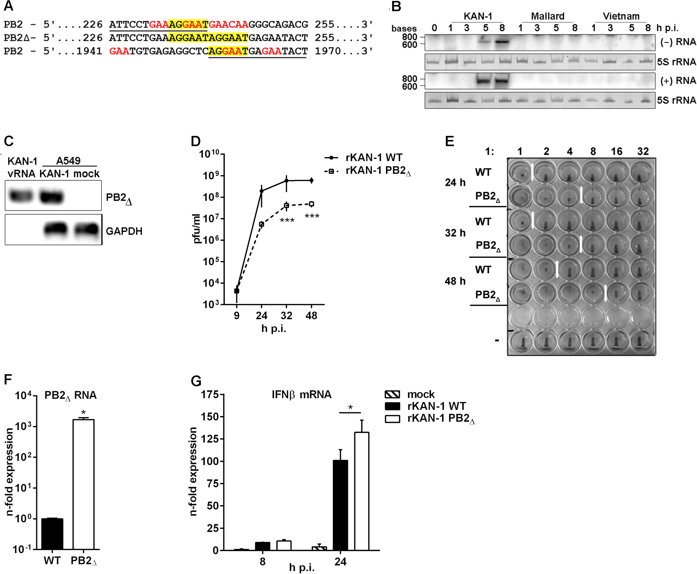 Characterization of the H5N1 KAN-1-expressed PB2<sub>∆</sub> DI-like RNA.