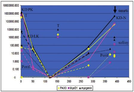 Sledování dynamiky MDN pomocí monitorování exprese fúzního genu PAX3/FOXO1 a transkripčního faktoru MyoD1 u pacientky s alveolárním rabdomyosarkomem. Pacientka měla v době diagnózy masivní infiltraci kostní dřeně rabdomyoblasty. Hodnoty na levé vertikální ose představují hladinu exprese PAX3/FOXO1 a MyoD1, na horizontální ose je znázorněná doba od diagnózy. KD – aspirát kostní dřeně, KD P – aspirát z pravé lopaty kyčelní, KD L – aspirát z levé lopaty kyčelní, Perif. – periferní krev, T – nádorová tkáň, uzliny – lymfatické uzliny při odběru z nekropsie.