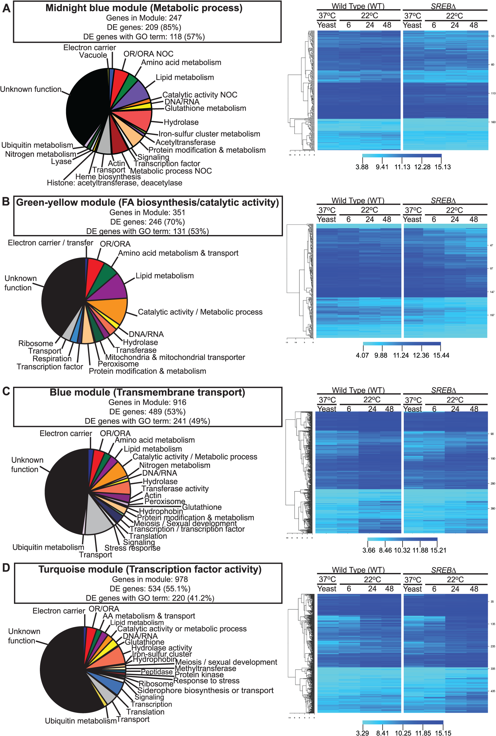 Weighted gene co-expression network analysis (WGCNA).