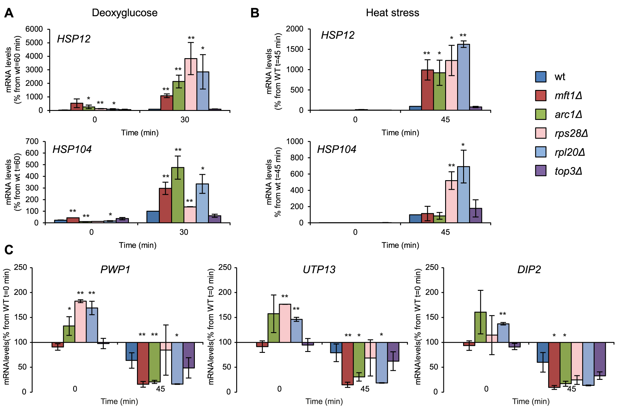 Deregulated stress-induced gene expression in SG-defective mutants.
