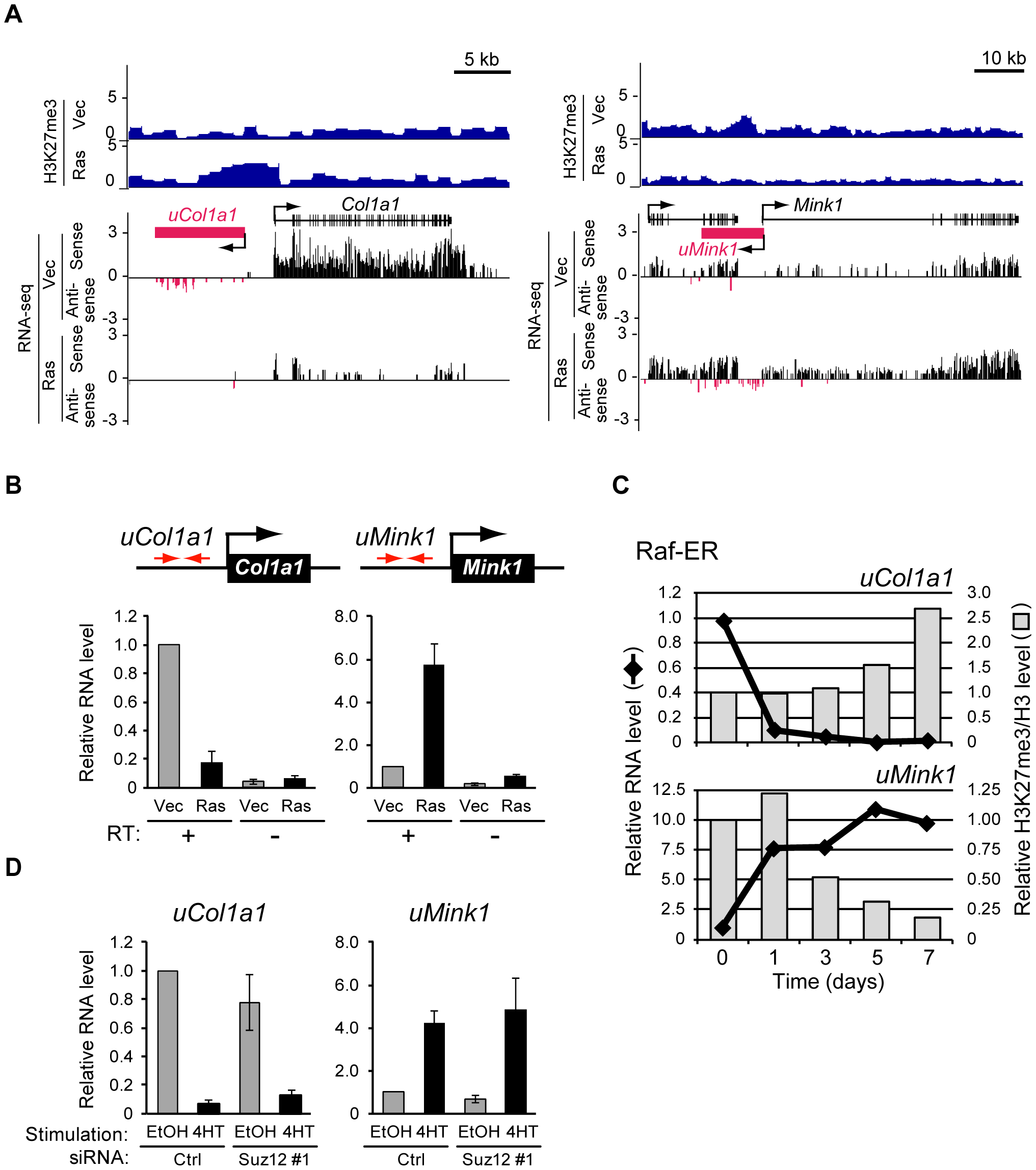 Signaling-induced changes in the production of novel transcripts from intergenic regions occur before changes in H3K27me3 level.