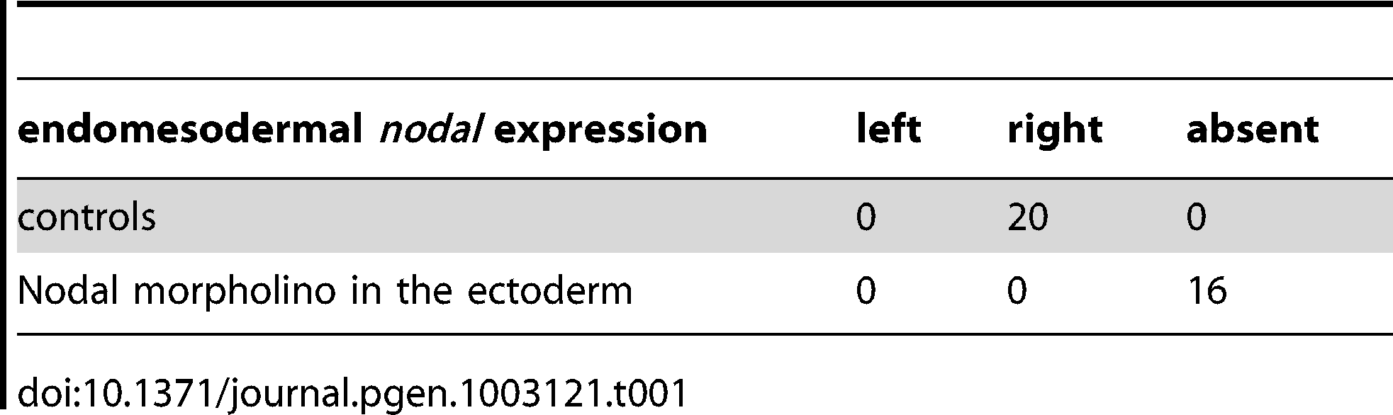 Expression of <i>nodal</i> in the endomesoderm following inhibition of Nodal signaling in the ectoderm.