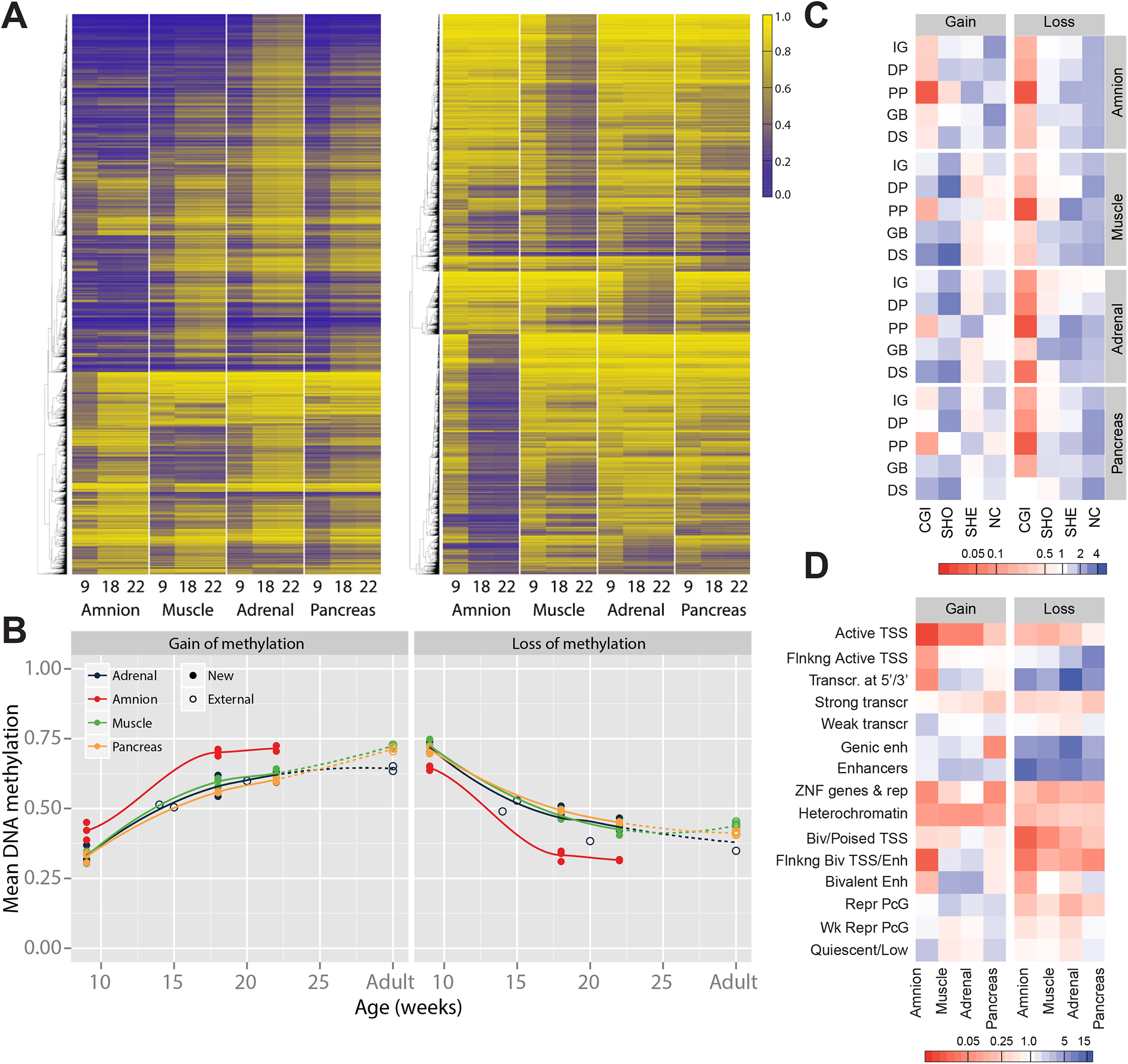 Gain and loss of DNA methylation during human fetal development.