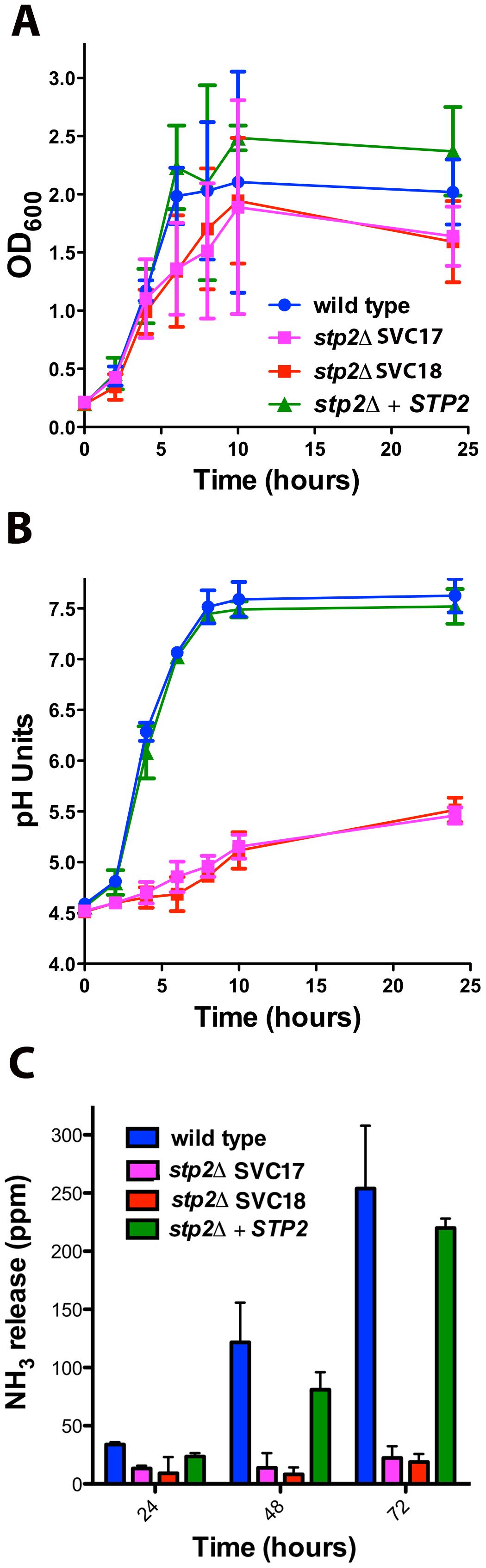 <i>C. albicans</i> s<i>tp2Δ</i> mutant cells fail to change the environmental pH.