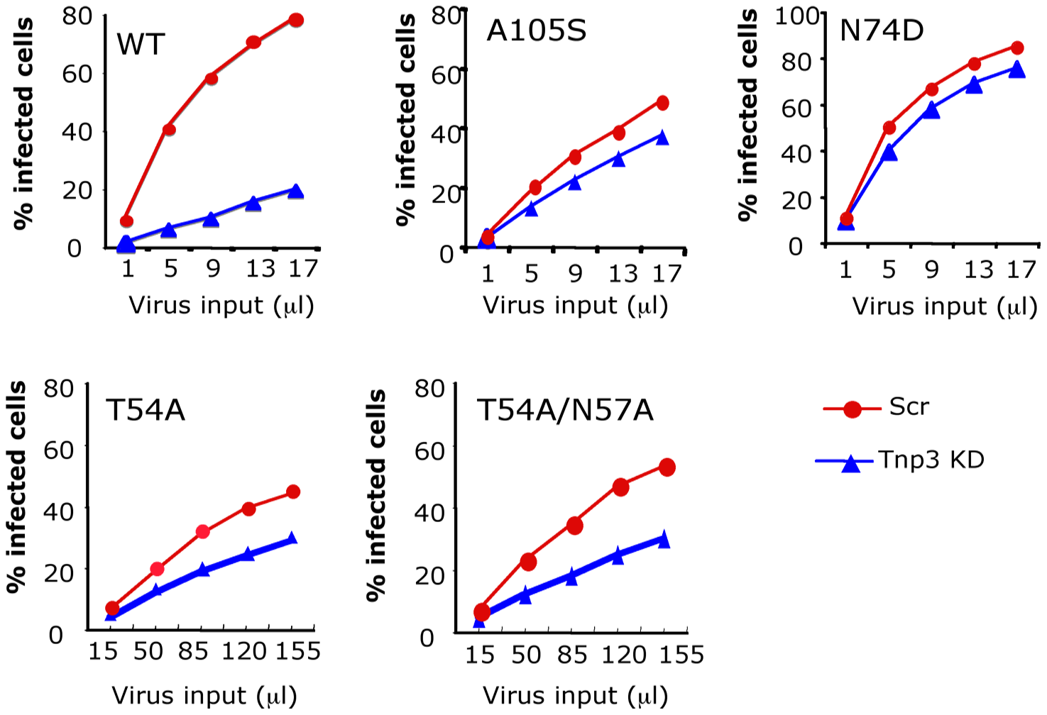 CA is an important determinant for HIV-1 dependence on Tnp3.