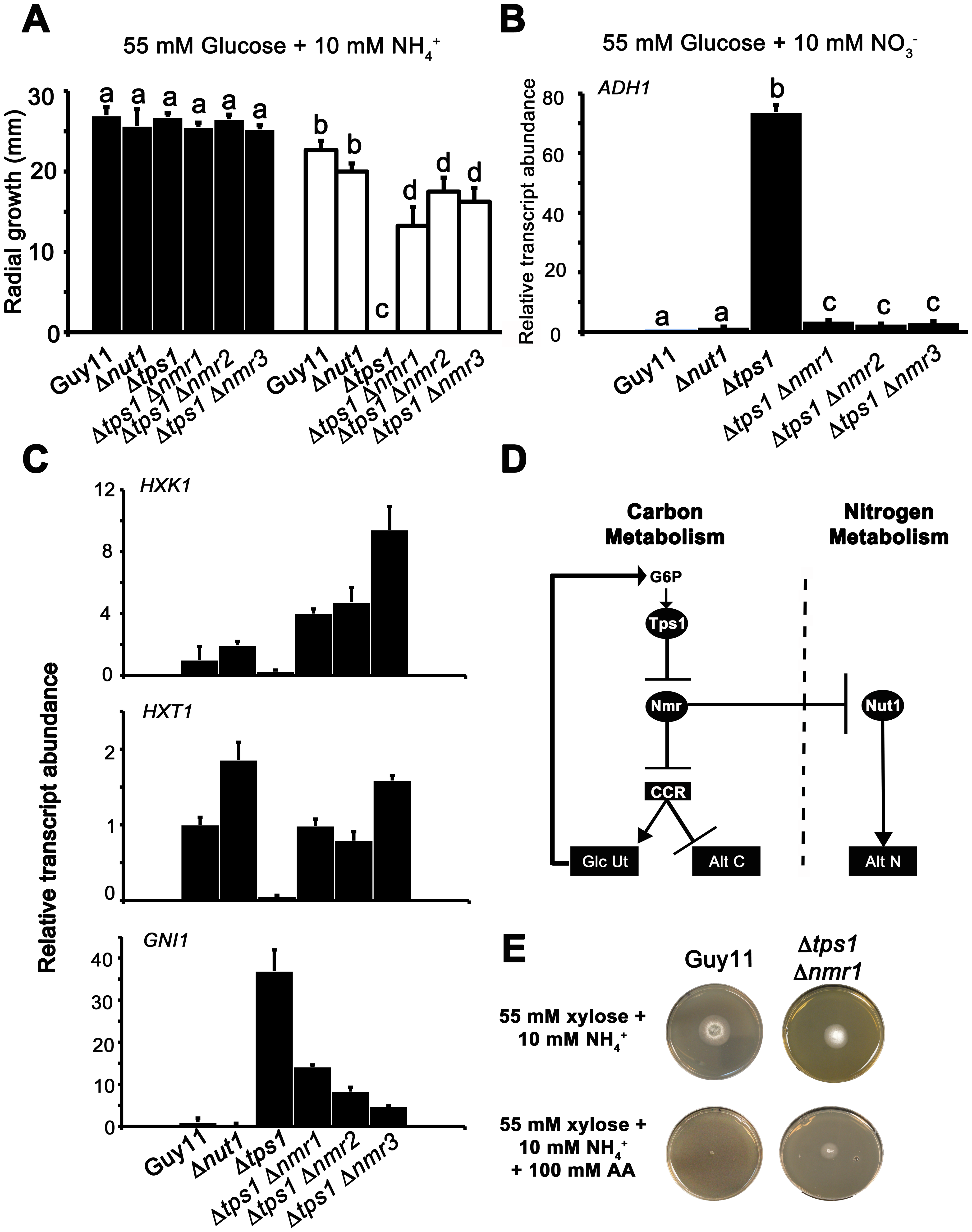 The Nmr1-3 inhibitor proteins regulate CCR independently of Nut1.