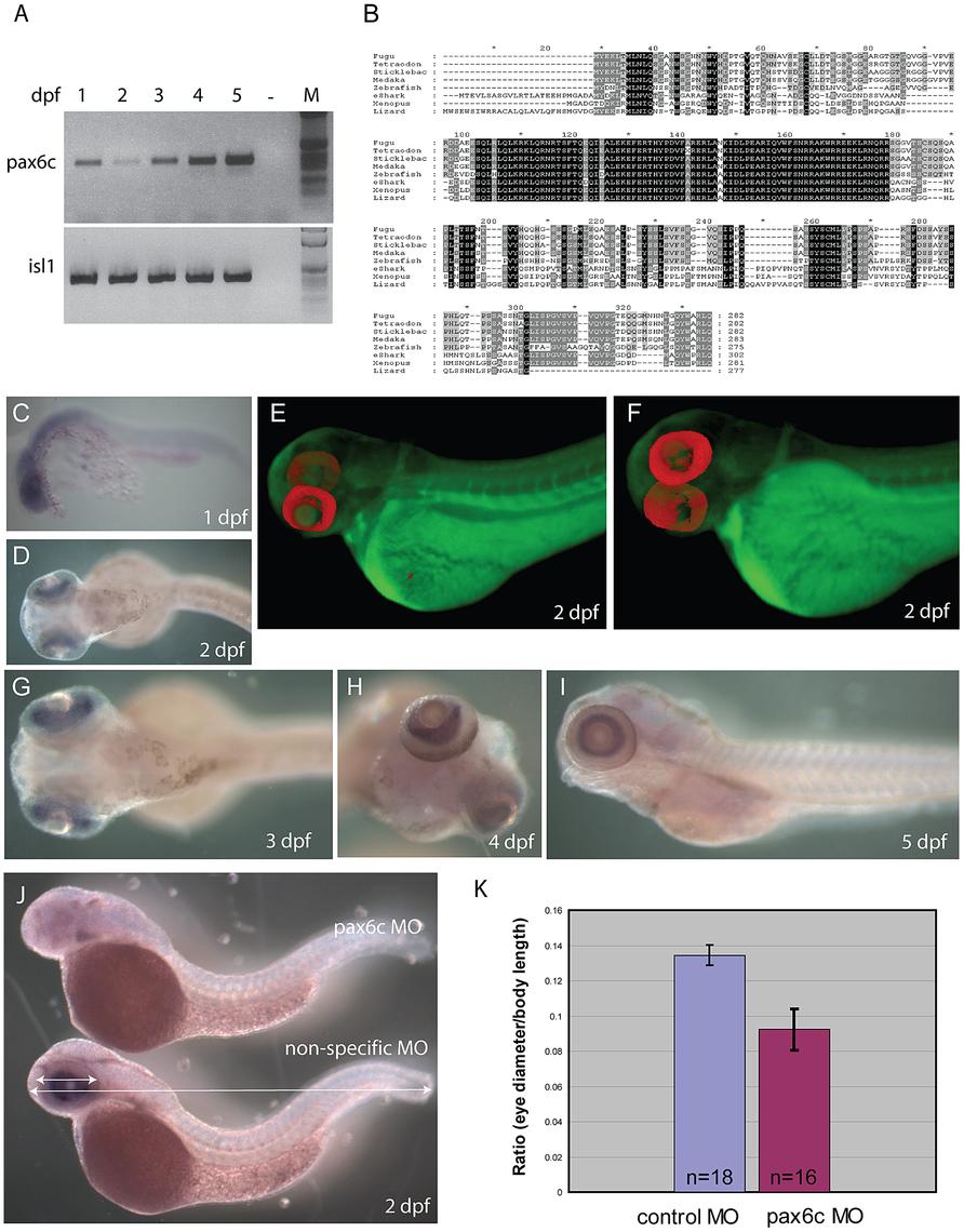 Characterization of zebrafish <i>Pax6.2a</i>.