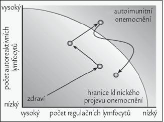 Působením D<sub>3</sub> muže dojít k namnožení a aktivaci regulačních T-lymfocytů a zvrácení negativního průběhu autoimunitního onemocnění. Obrázek byl použit se souhlasem redakce z [1].