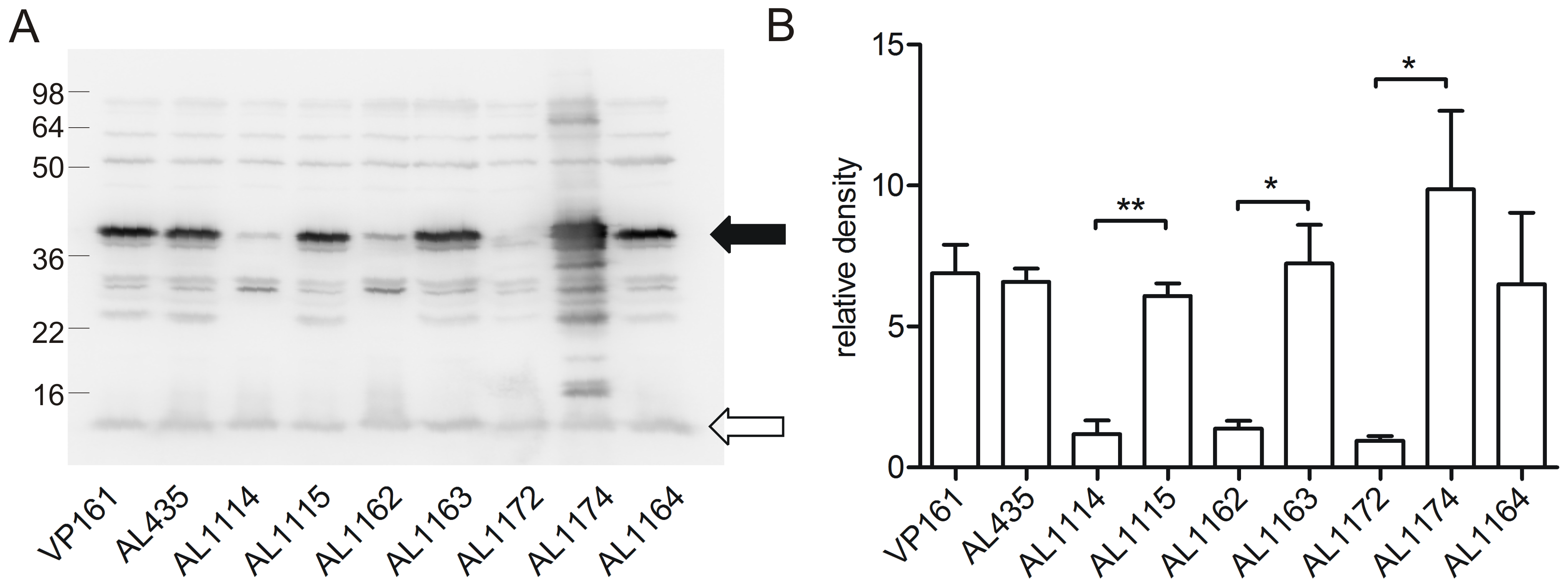 Western immunoblot and densitometry analysis of <i>P. multocida</i> PlpE expression in acapsular, capsulated and control strains.