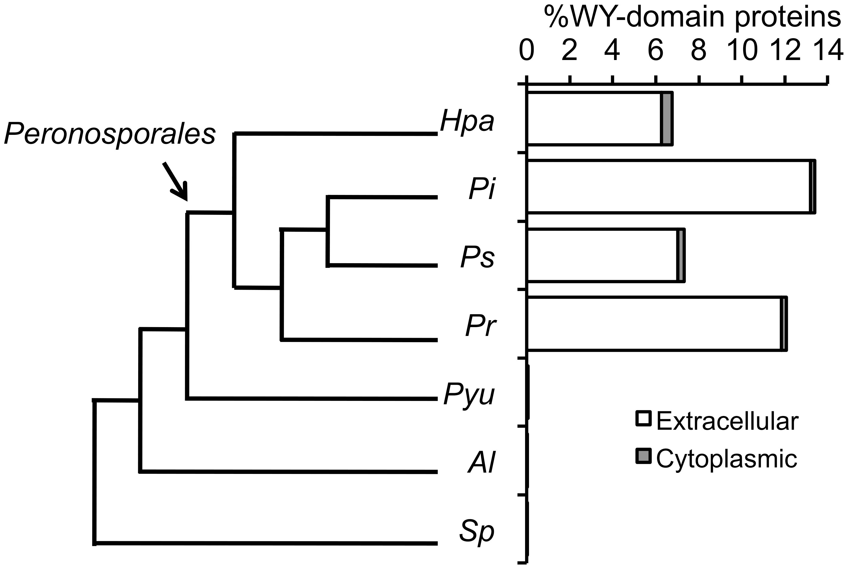 Phylogenetic relationship and presence of the WY-domain HMM signature in sequenced oomycete genomes.