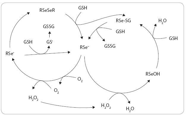 Redox cyklovanie a tvorba ROS. Prebraté z práce [27].