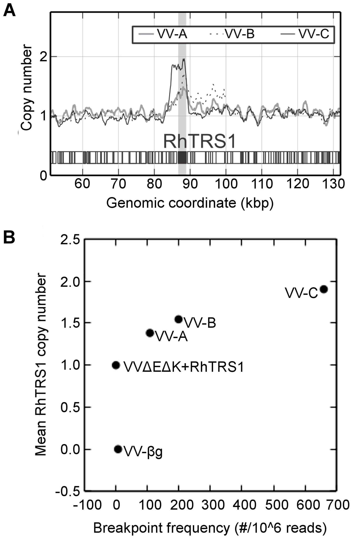 <i>Rhtrs1</i> copy number variation relative to VVΔEΔK+RhTRS1.