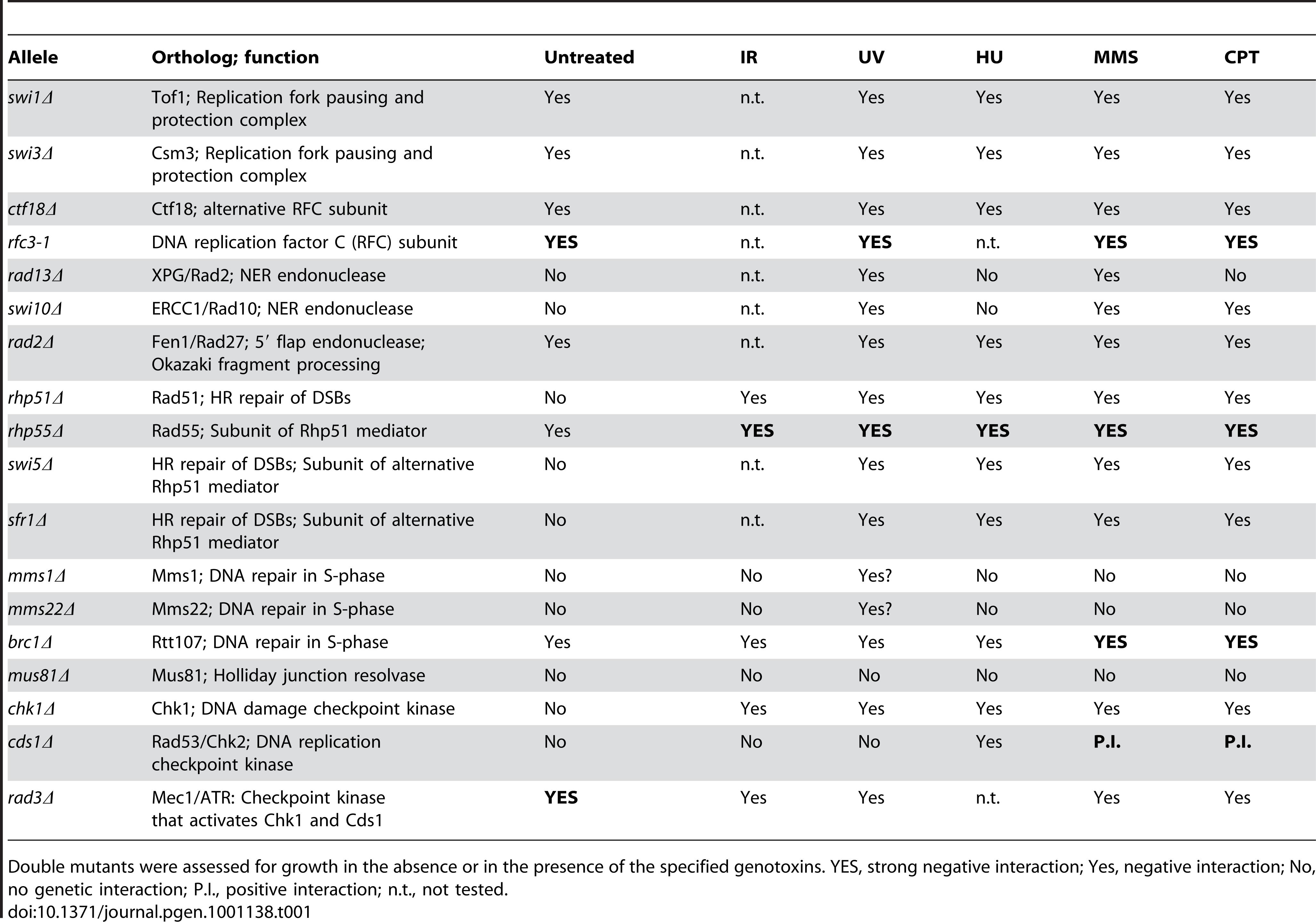Summary of genetic interactions involving <i>ssb3Δ</i>.