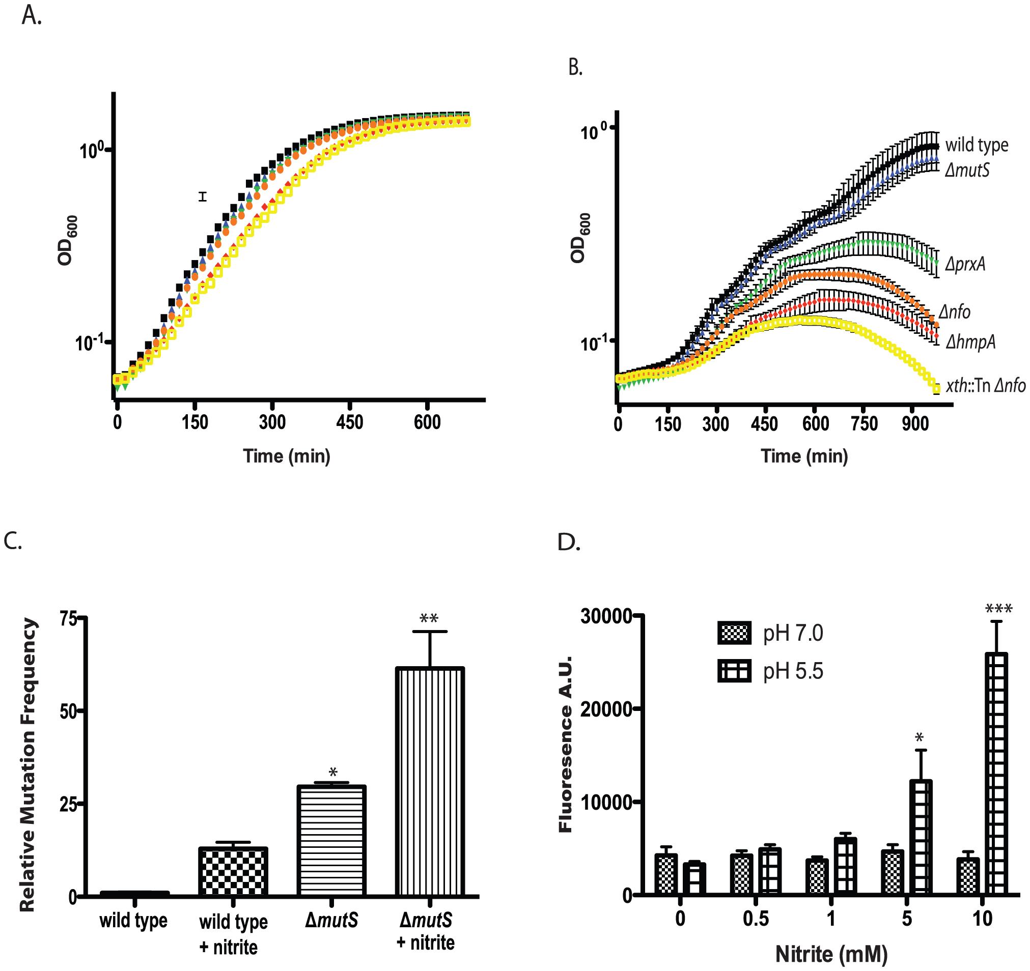 Effect of nitrite on growth of wild type and mutant <i>V. cholerae</i> strains.