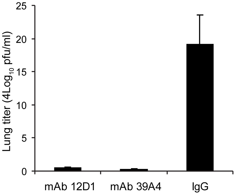 Anti-H3 mAbs protect against replication of H3 virus in lungs.