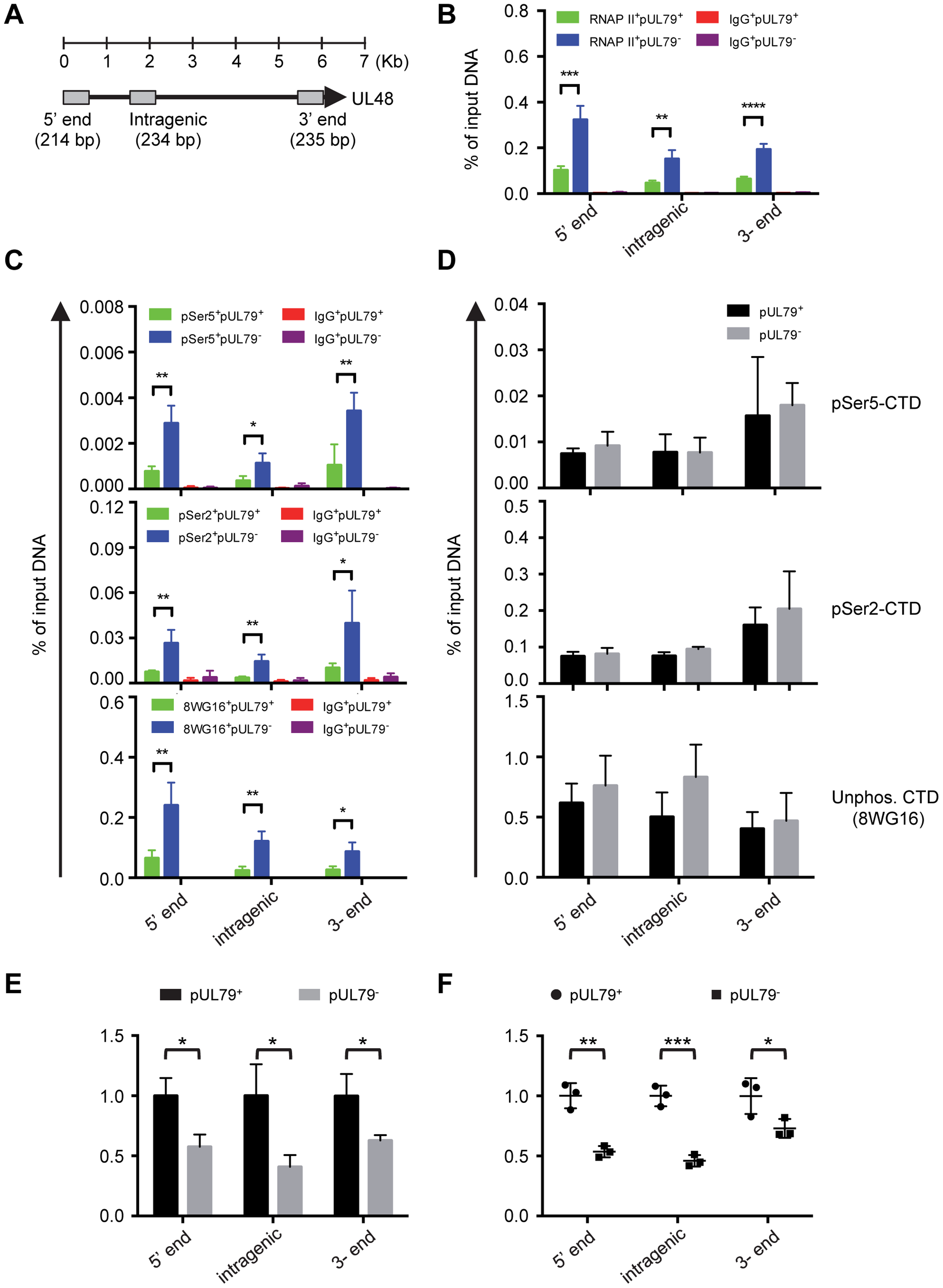 pUL79 alters the rate of transcriptional elongation at various regions of the UL48 gene.