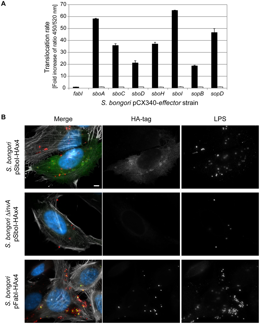 <i>S. bongori</i> translocates five novel effector proteins into the host cell.