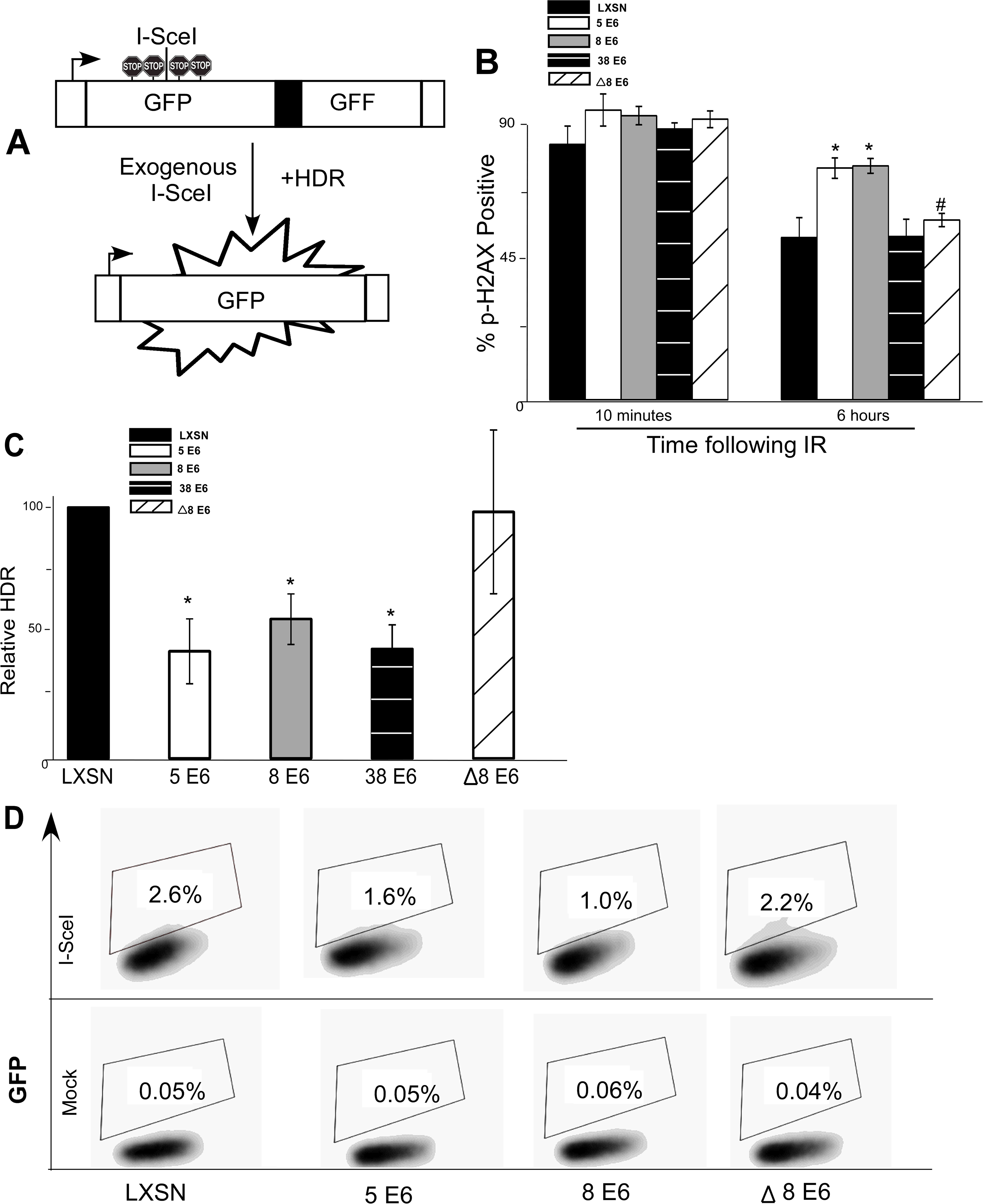β-HPV 5 and 8 E6 attenuate homology dependent repair of double strand breaks.