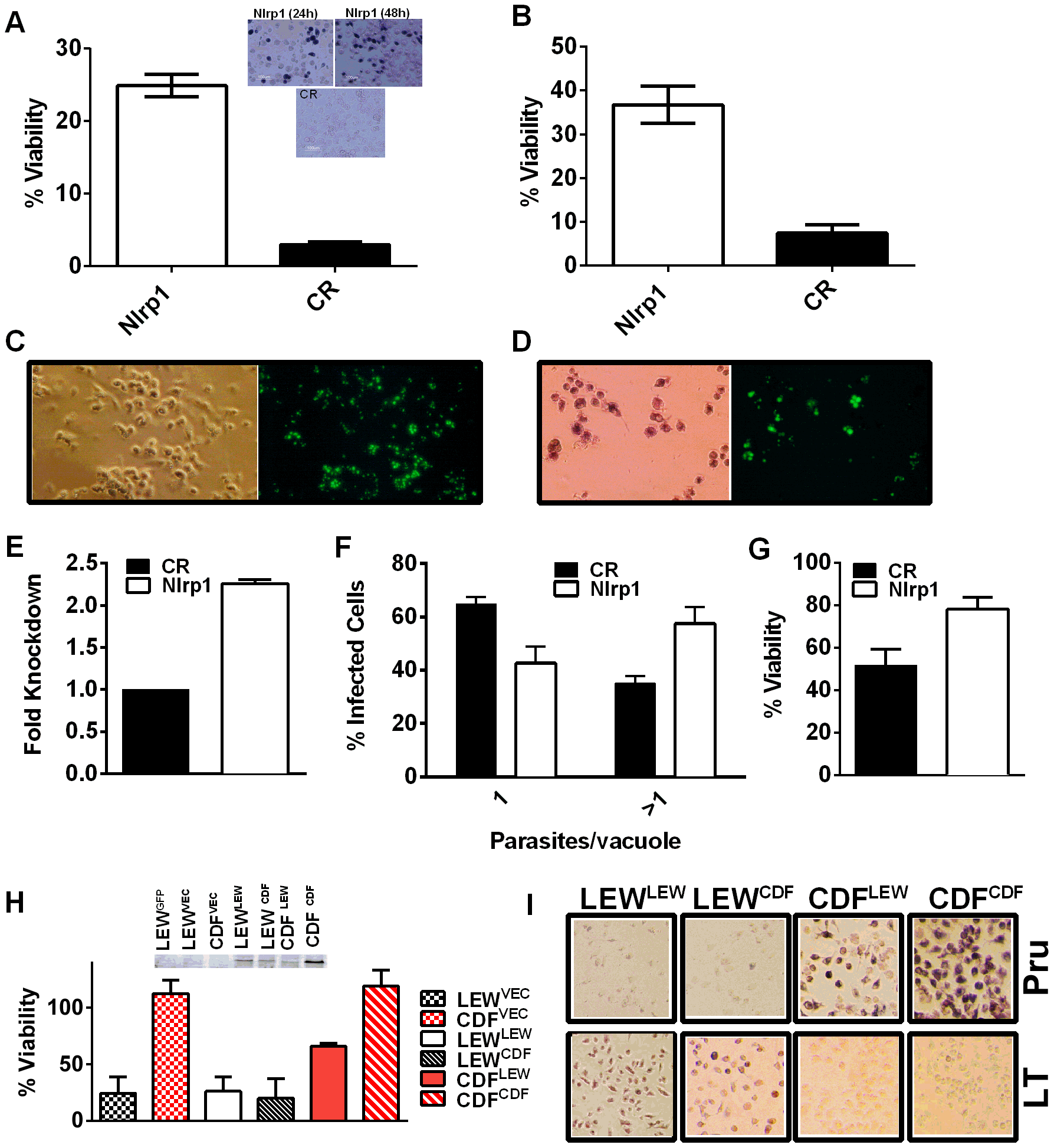 <i>Nlrp1</i> knockdown provides protection against <i>Toxoplasma-</i>induced pyroptosis and overexpression of NLRP1<sup>variant 5</sup> sensitizes resistant macrophages.