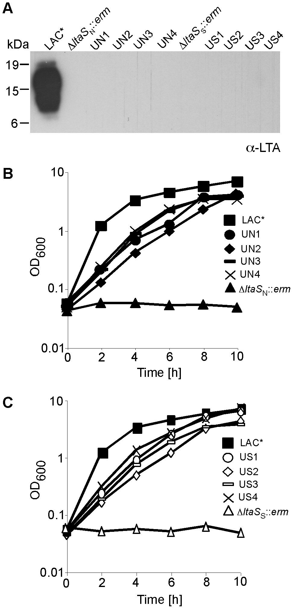 Growth and LTA production of CA-MRSA LAC* and LAC*Δ<i>ltaS</i> strains.