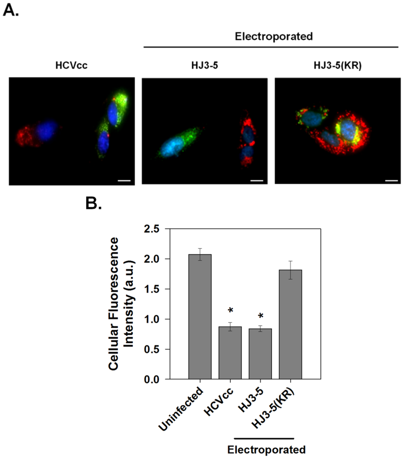 p7 channel activity within infected cells.