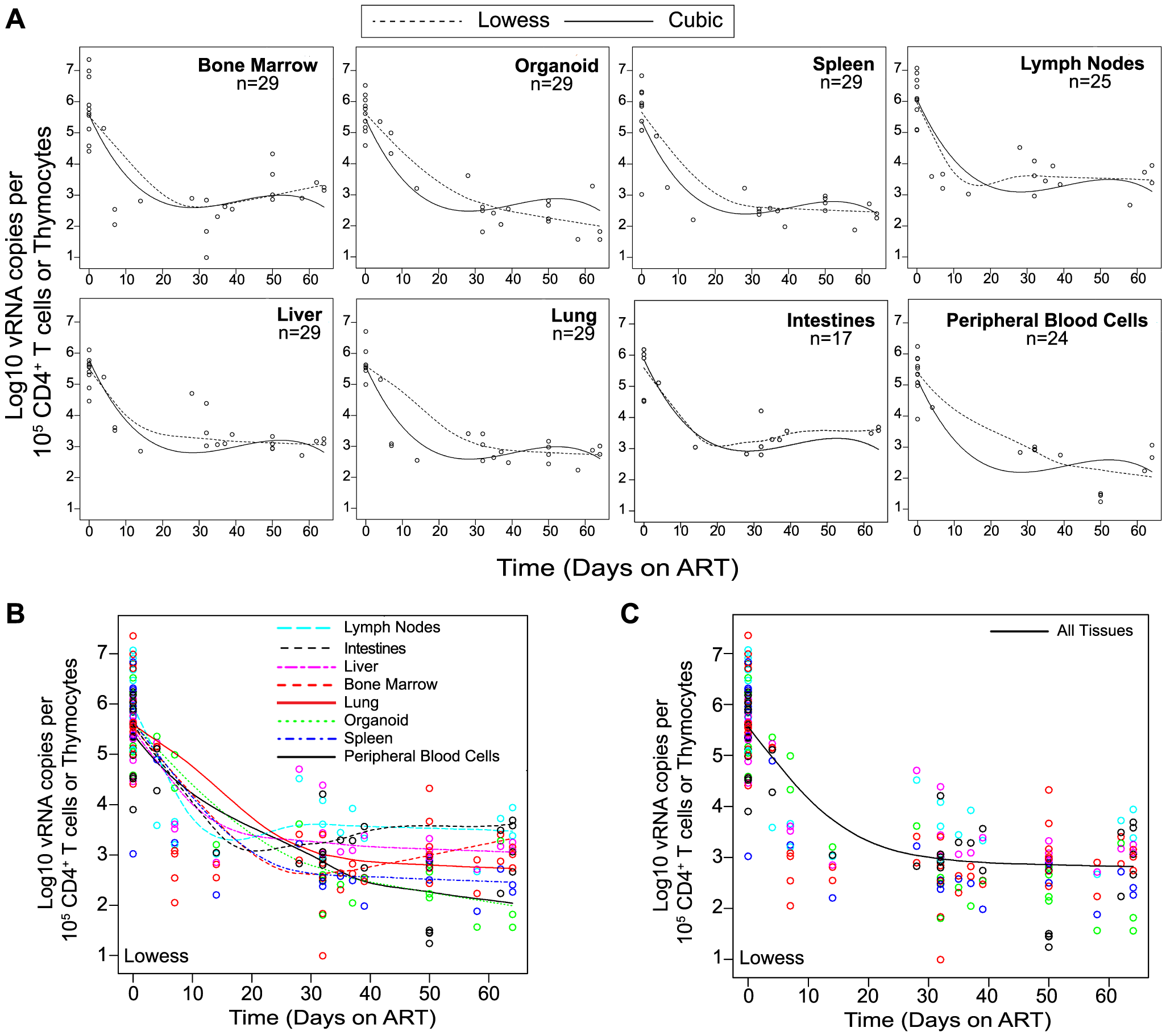 Viral RNA production during ART rapidly declines and then enters a plateau phase in all tissues.