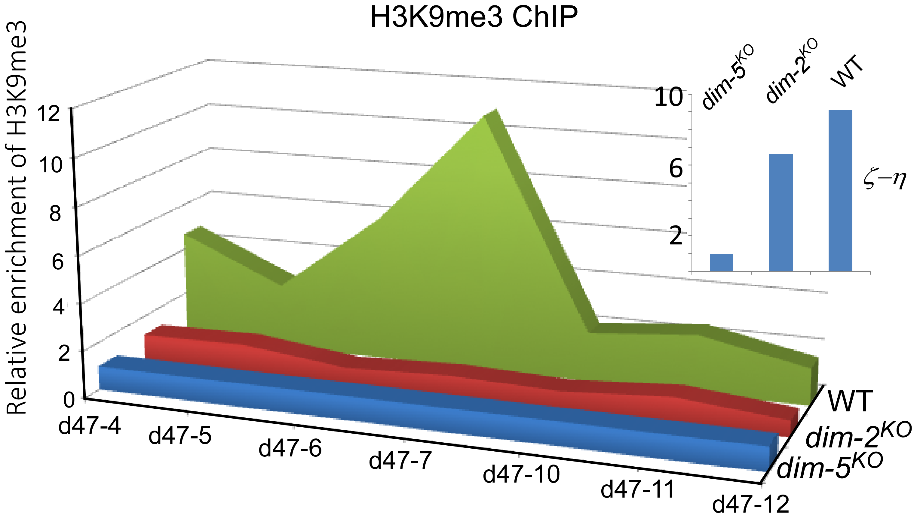 Histone H3K9me3 modification in the <i>disiRNA</i> loci is dependent on DIM-2.