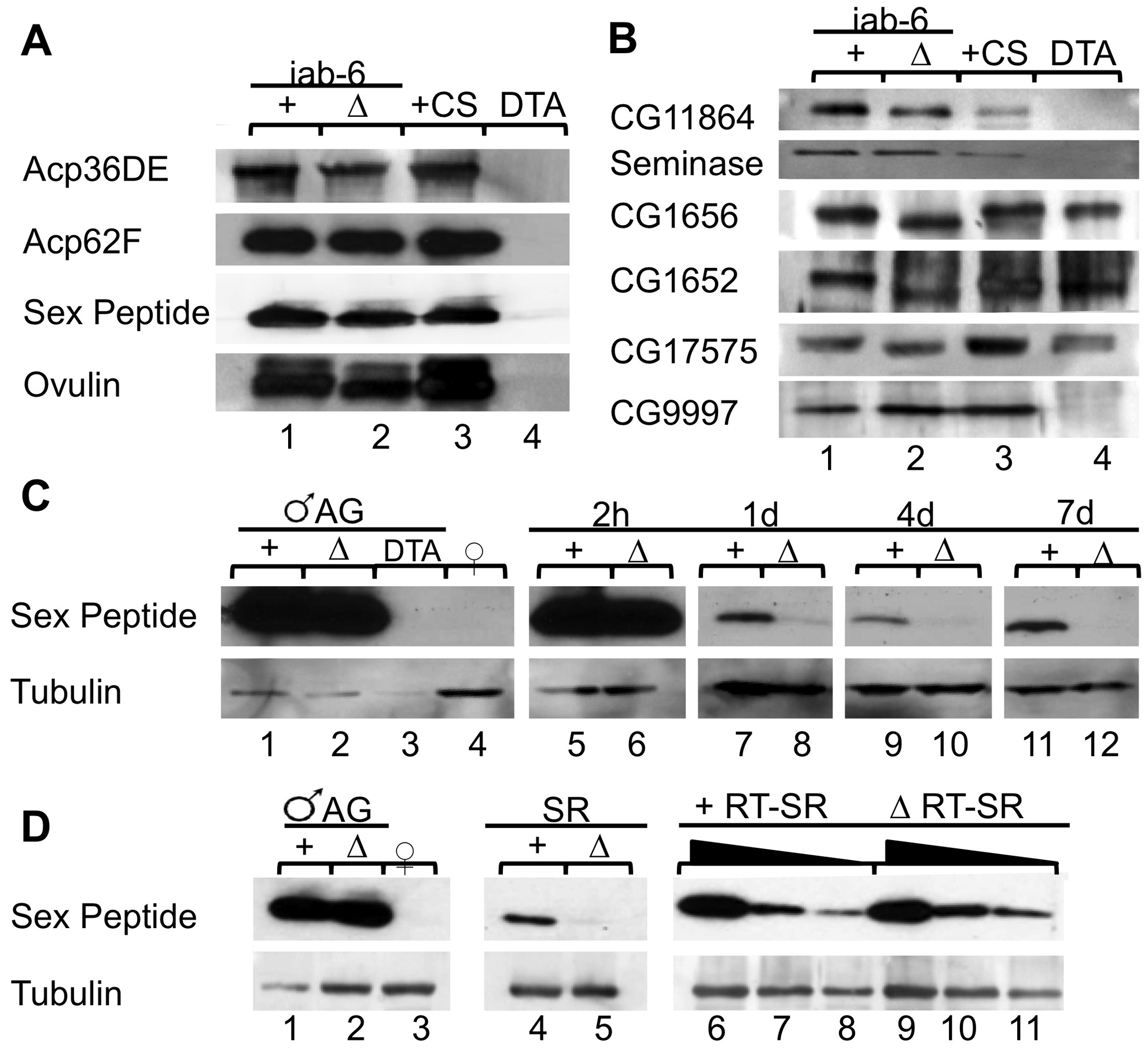 Seminal fluid proteins in <i>iab-6<sup>cocu</sup></i> and control males, and their mates.