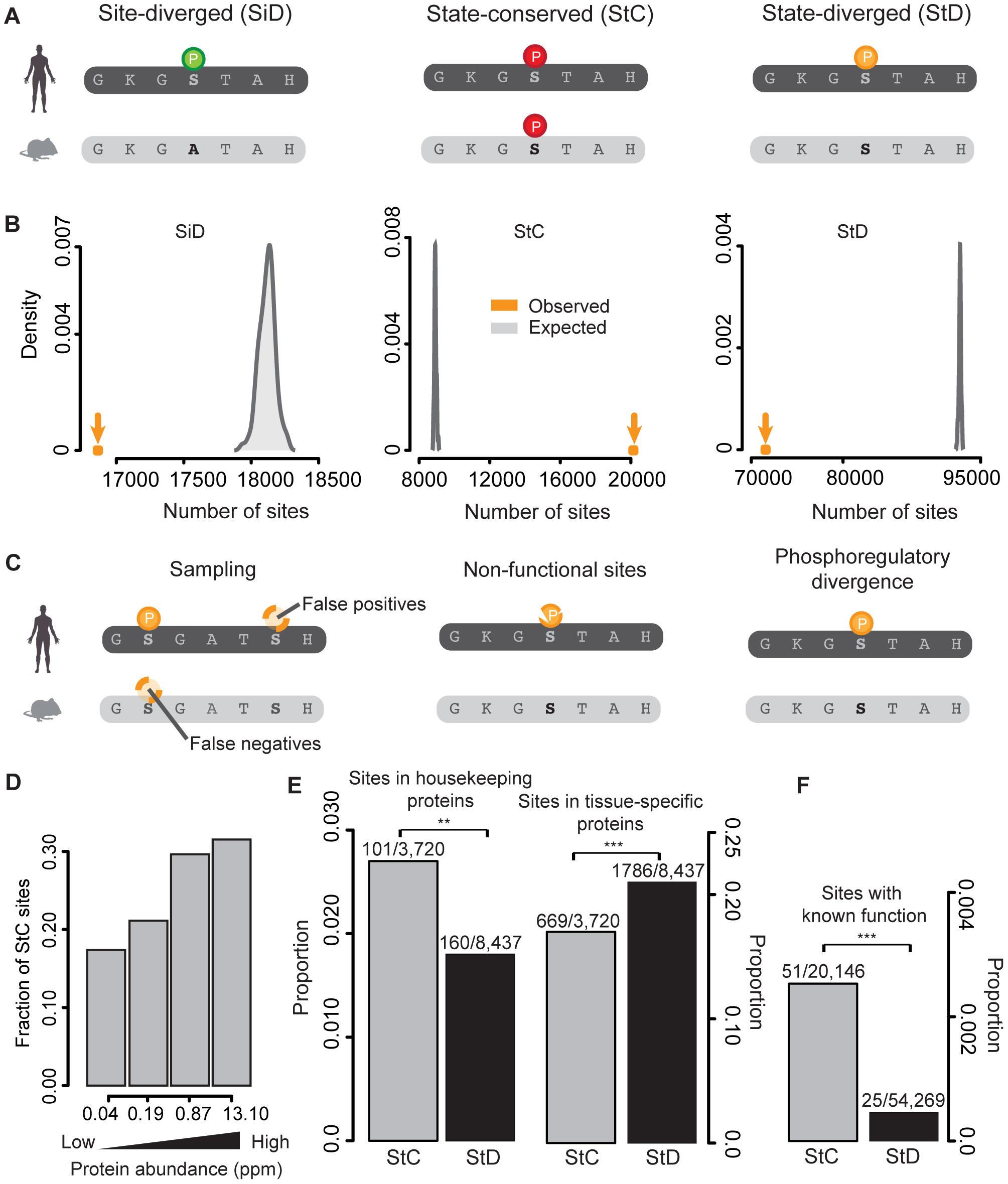 Purifying selection is acting on mammalian phosphorylation sites and their phosphorylation status.