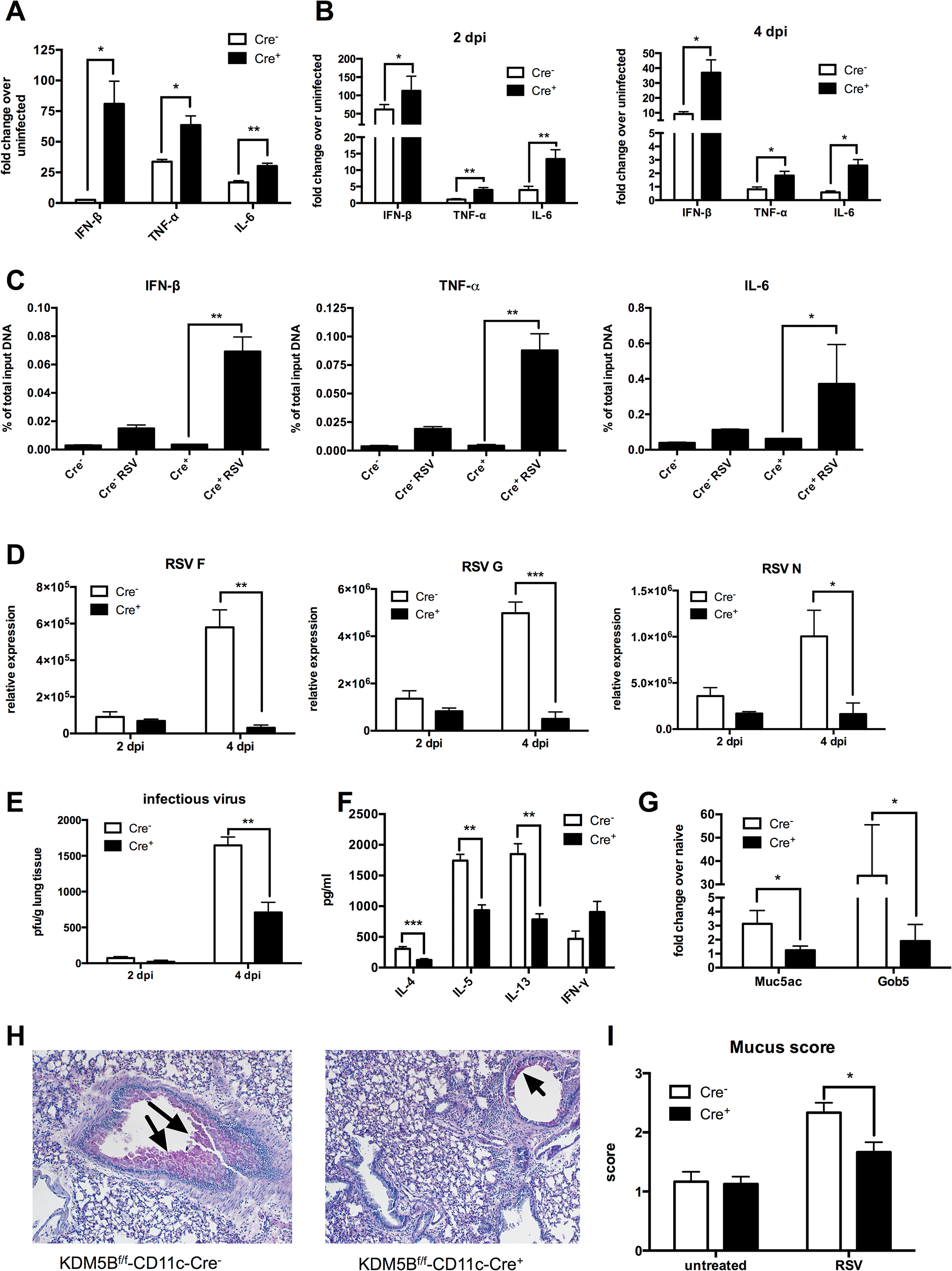 Deletion of <i>Kdm5b</i> in DCs leads to increased cytokine production and decreased Th2 pathology <i>in vivo</i>.