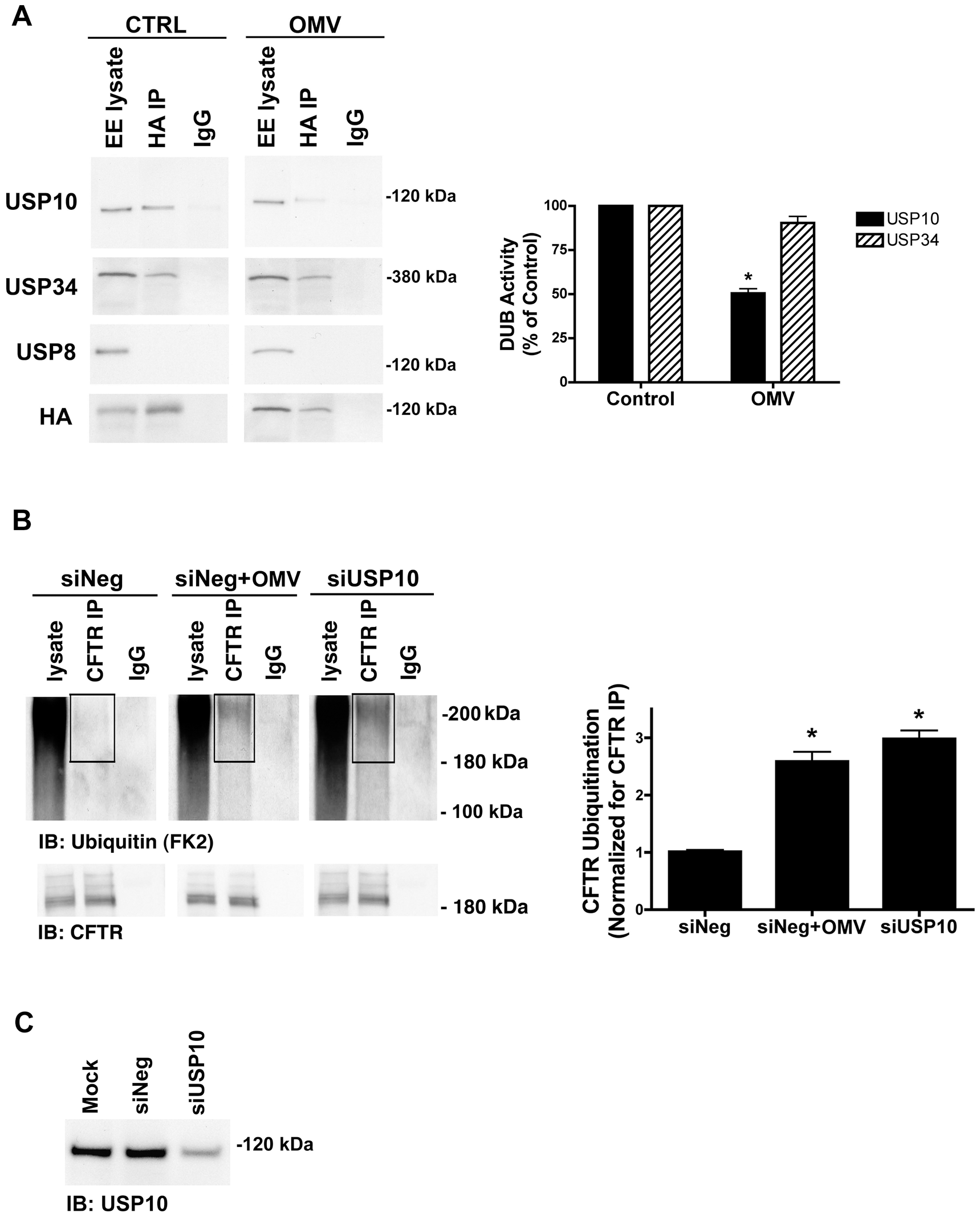 Cif selectively inhibits USP10 activity in early endosomes.