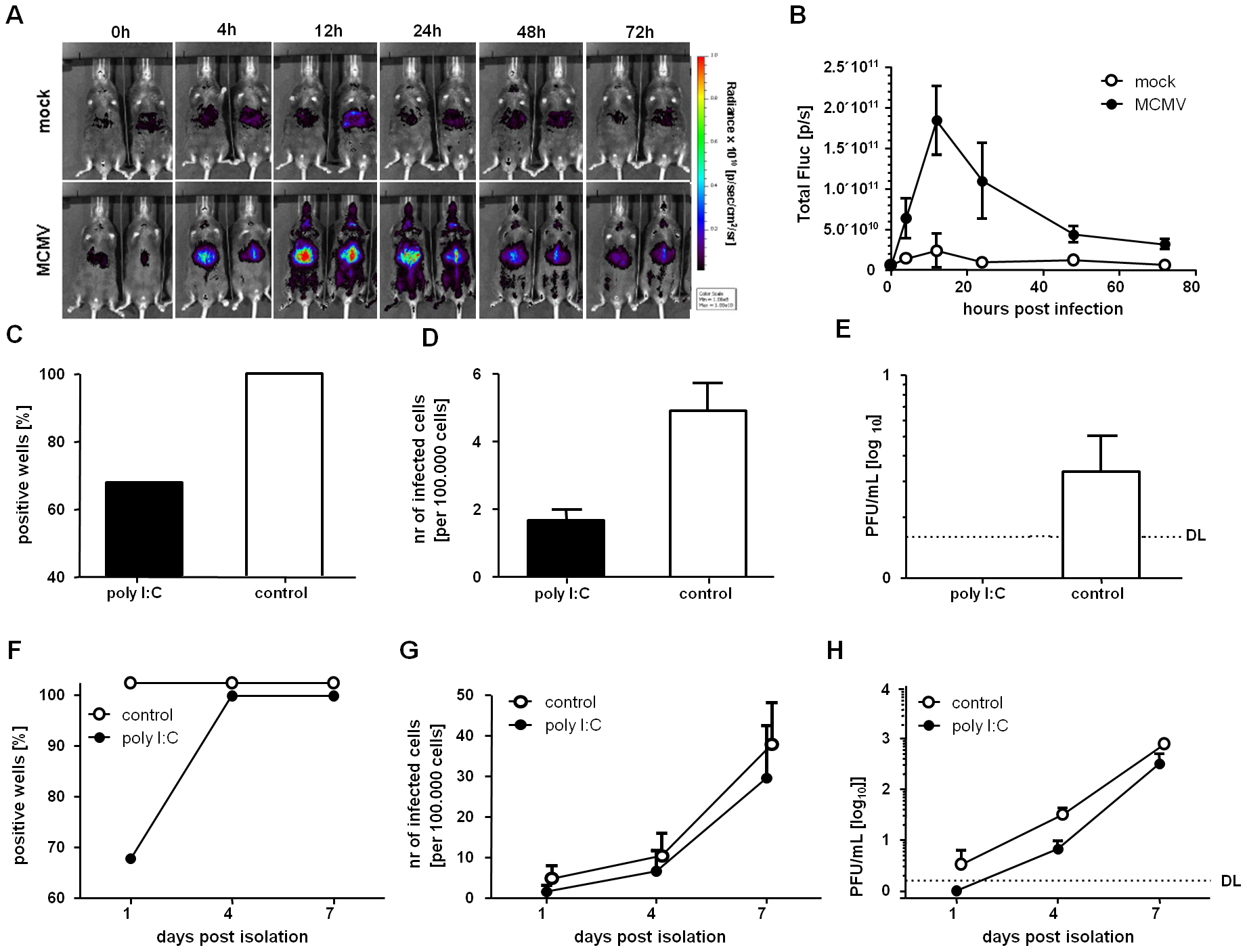 IFNβ stimulation <i>in vivo</i> induce a reversible silencing of MCMV in LSECs.