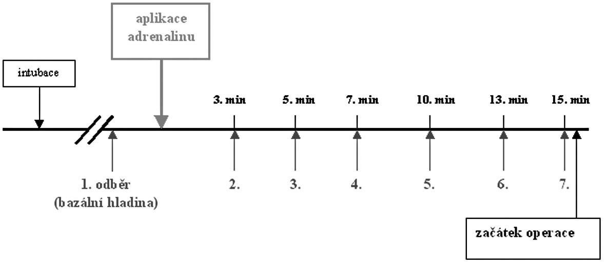 Časová osa - odběry venózní krve u topické aplikace adrenalinu