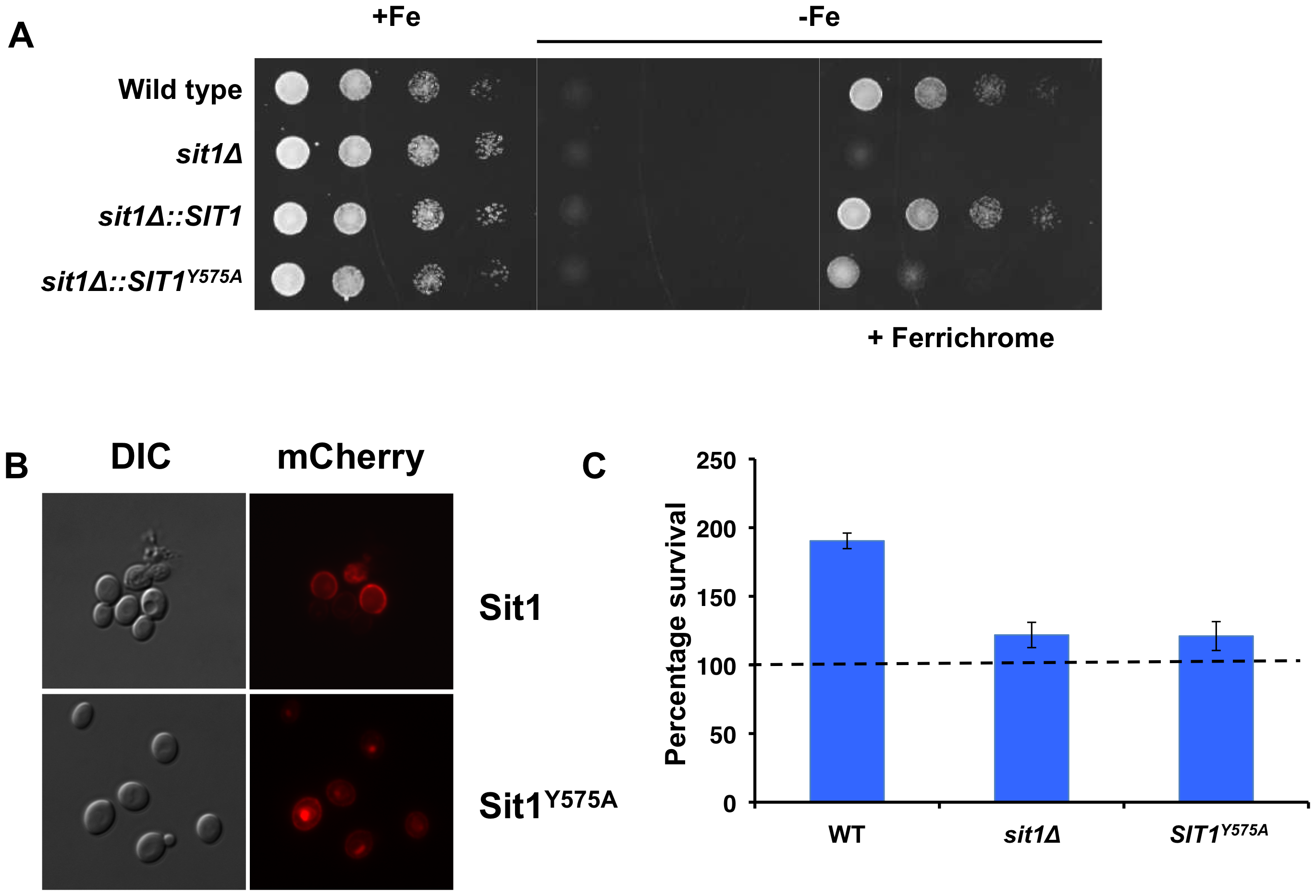 A conserved residue in the Sit1 SITD compromises ferrichrome utilization and survival in macrophages.