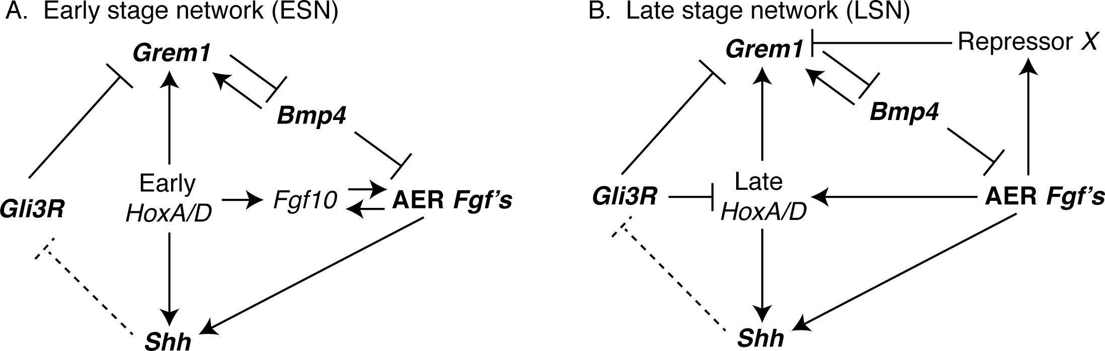 Interactions among genes in the (A) Early (ESN) and (B) Late (LSN) stage networks that were computationally modeled in this study are shown.
