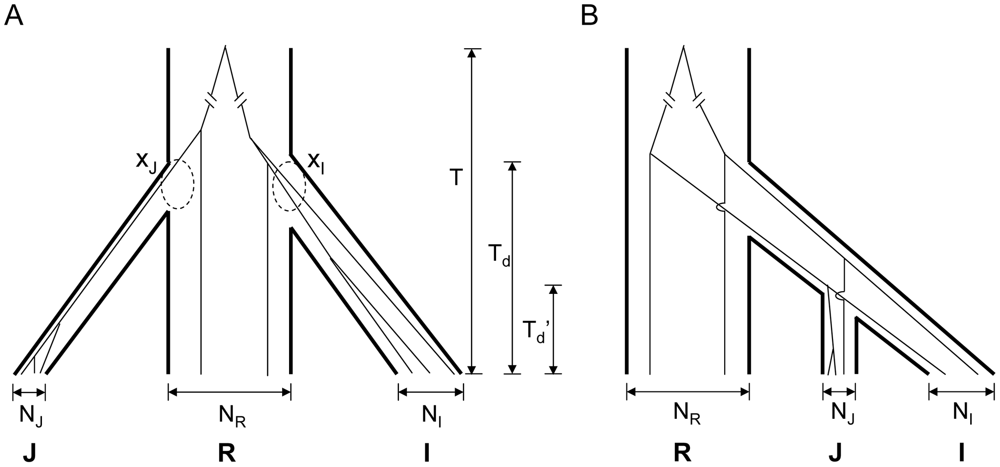 Two models for the domestication of <i>indica</i> (I) and <i>japonica</i> (J).