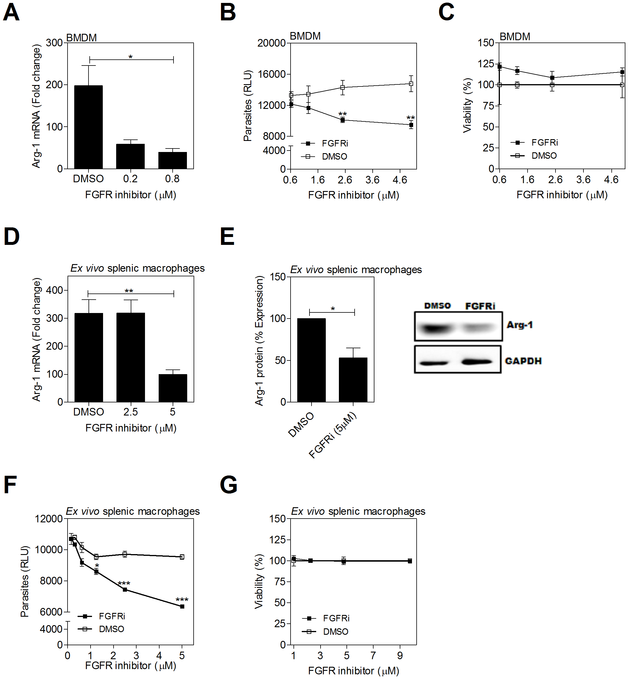 Inhibition of FGFR signaling decreases arg1 expression and parasite burden in <i>L. donovani</i> infected macrophages.