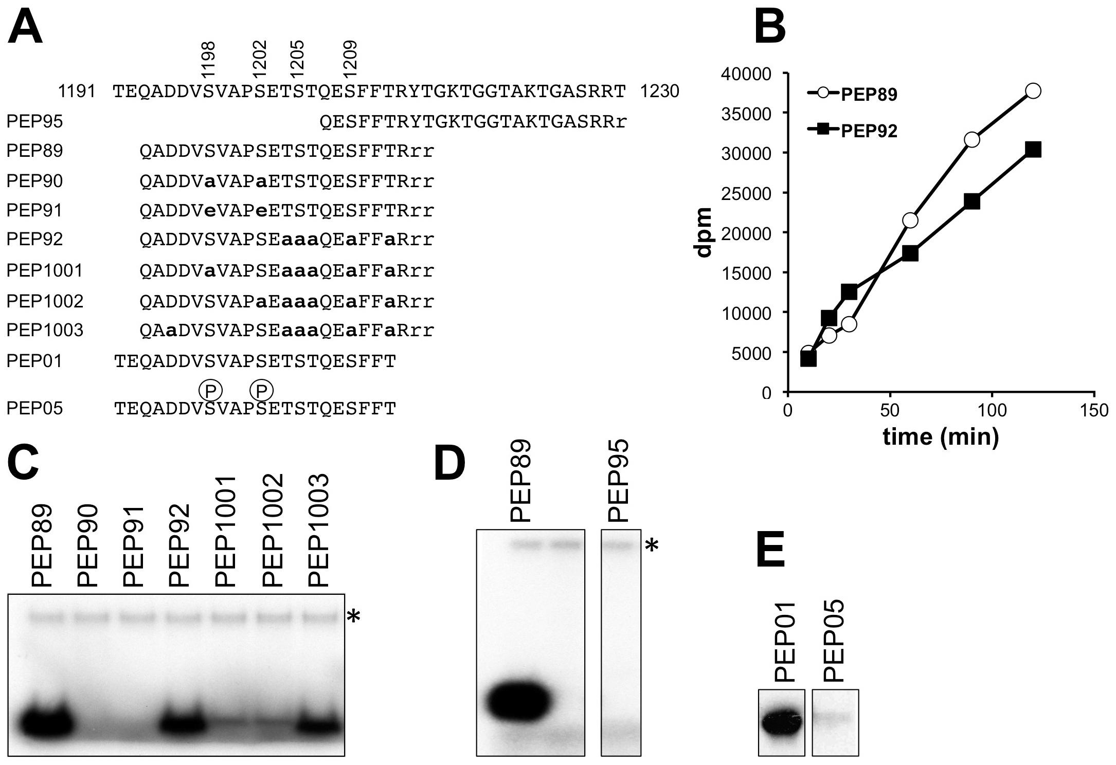<i>In vitro</i> phosphorylation of peptides corresponding to the Elp1 C-terminal region by Hrr25.