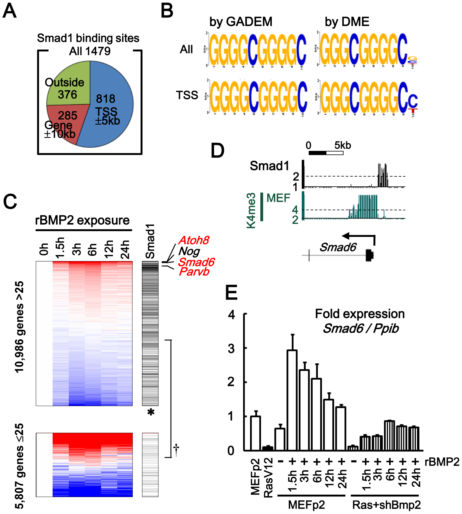 Smad1 targets in MEF, analyzed by ChIP-sequencing.