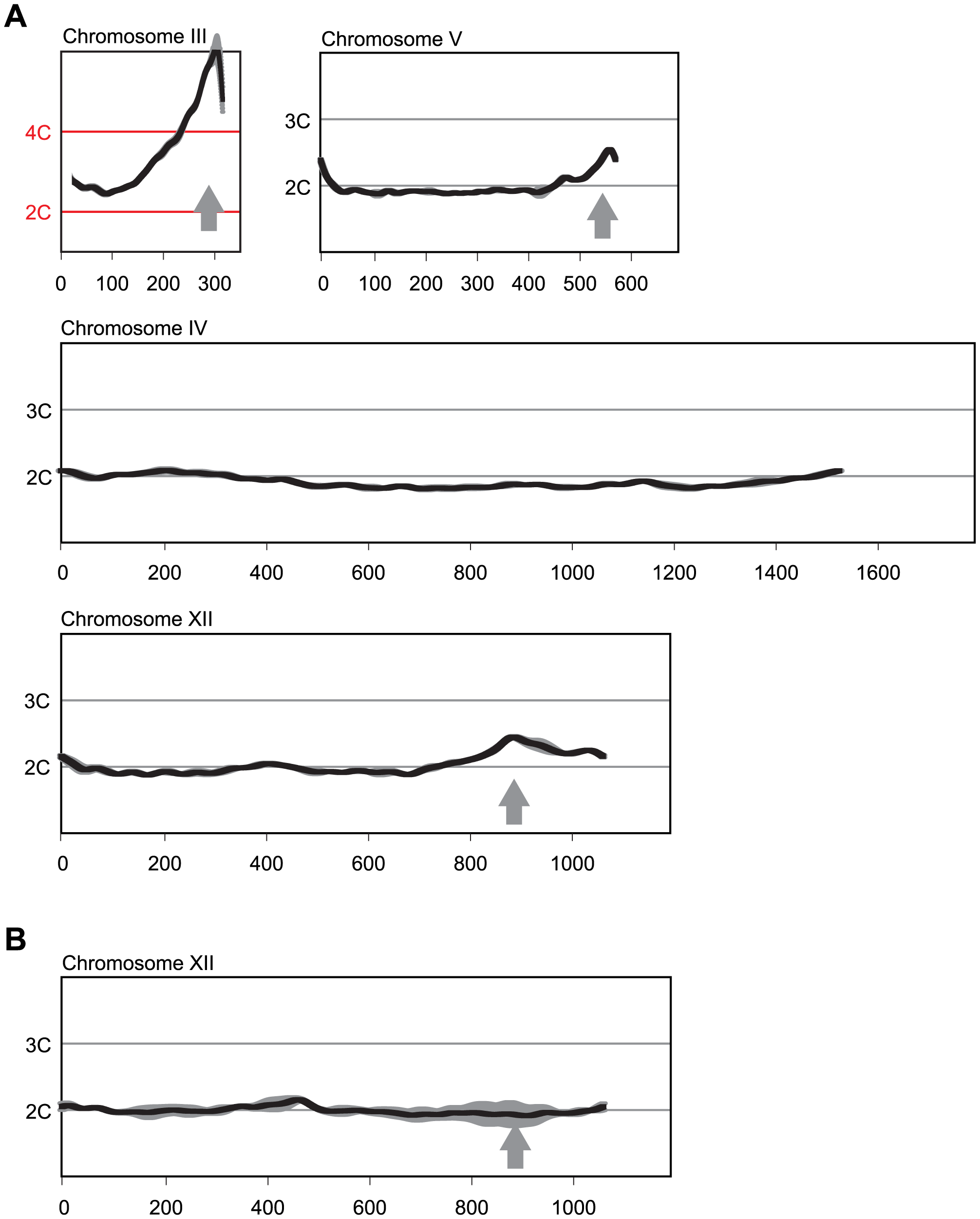 Multiple sites preferentially re-replicate when re-replication controls are deregulated in the <i>MC2Ao</i> strain background.