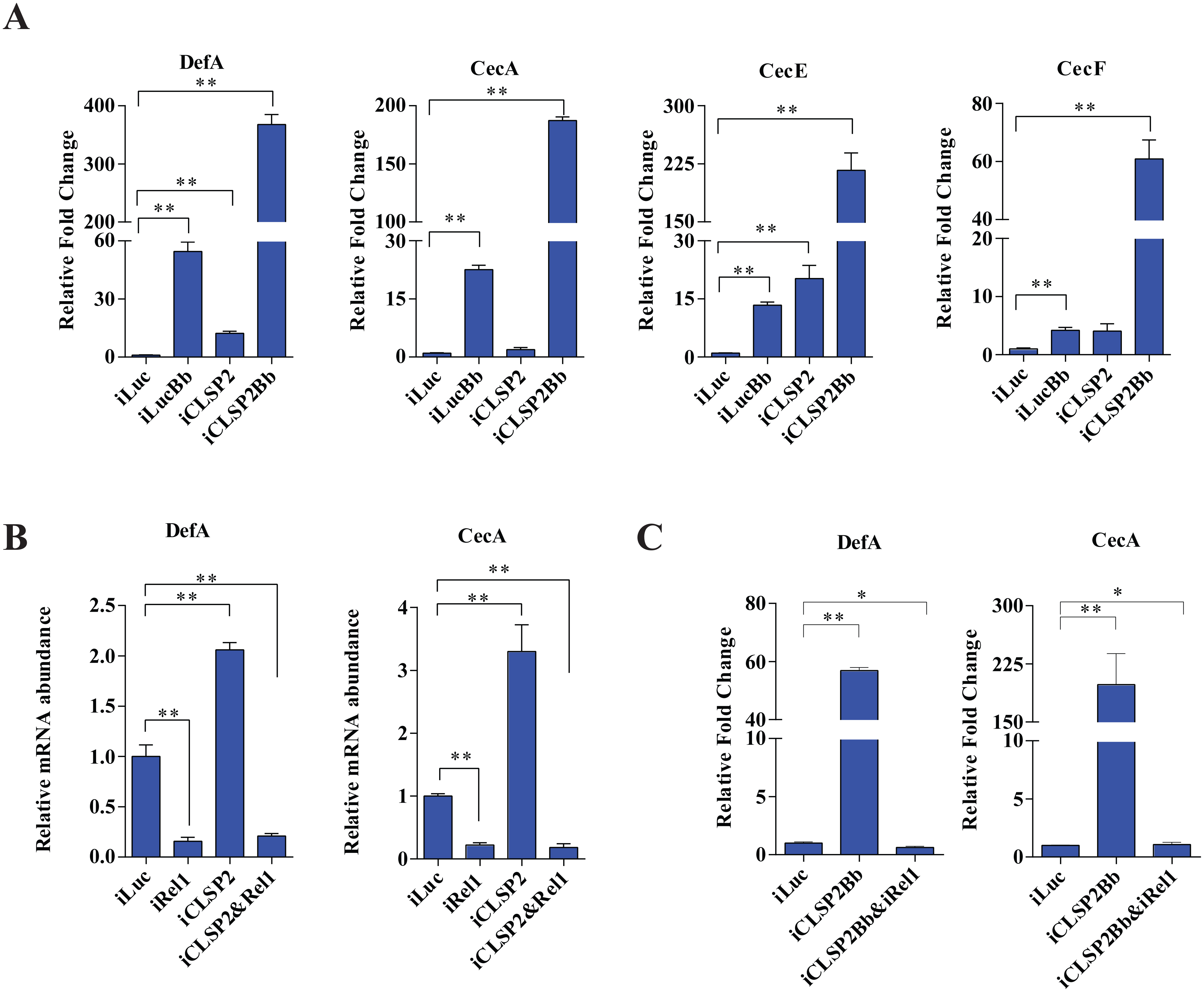 The effect of CLSP2 on the expression of AMPs.