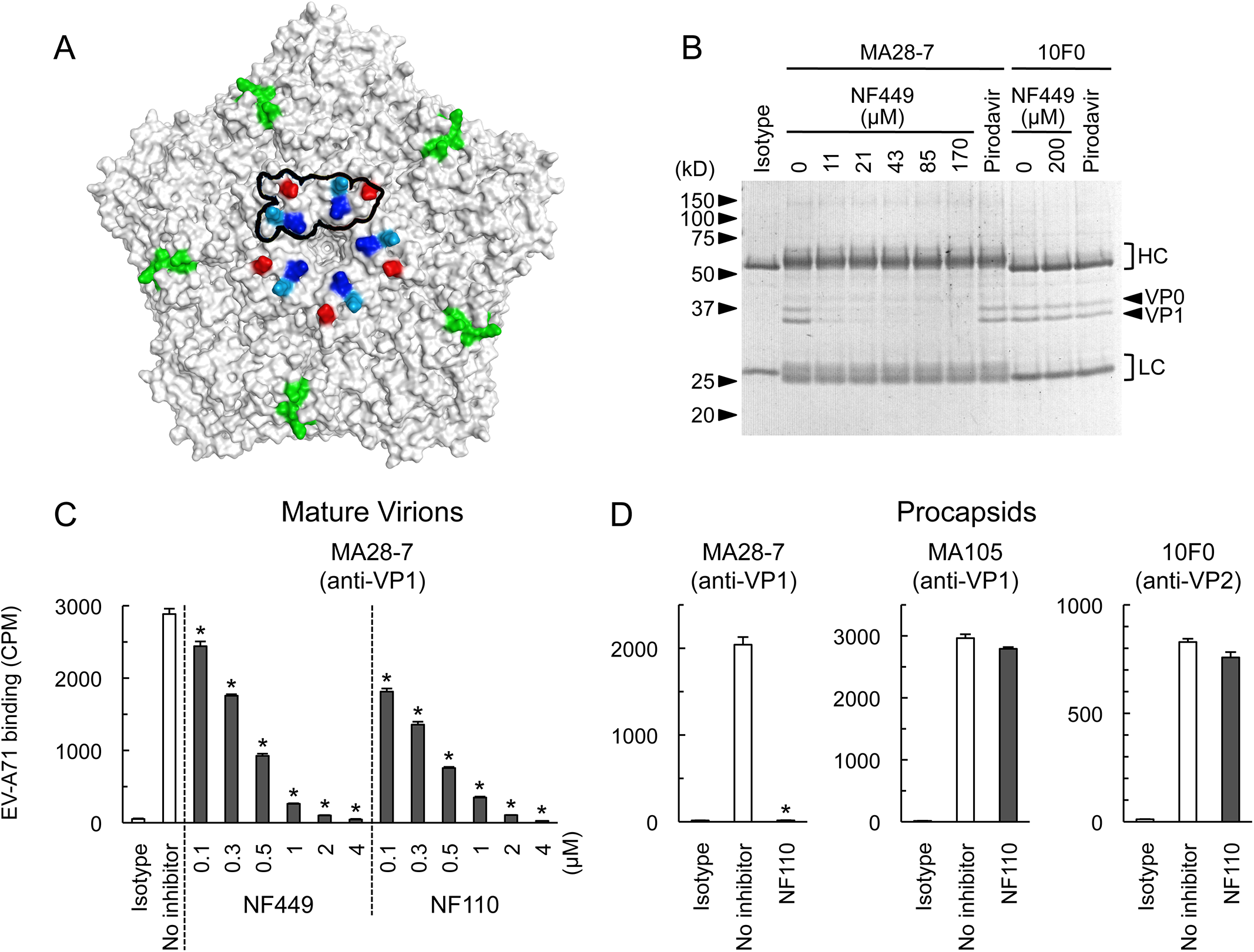 NF449 and NF110 specifically prevent attachment of a monoclonal antibody to the viral 5-fold vertex.