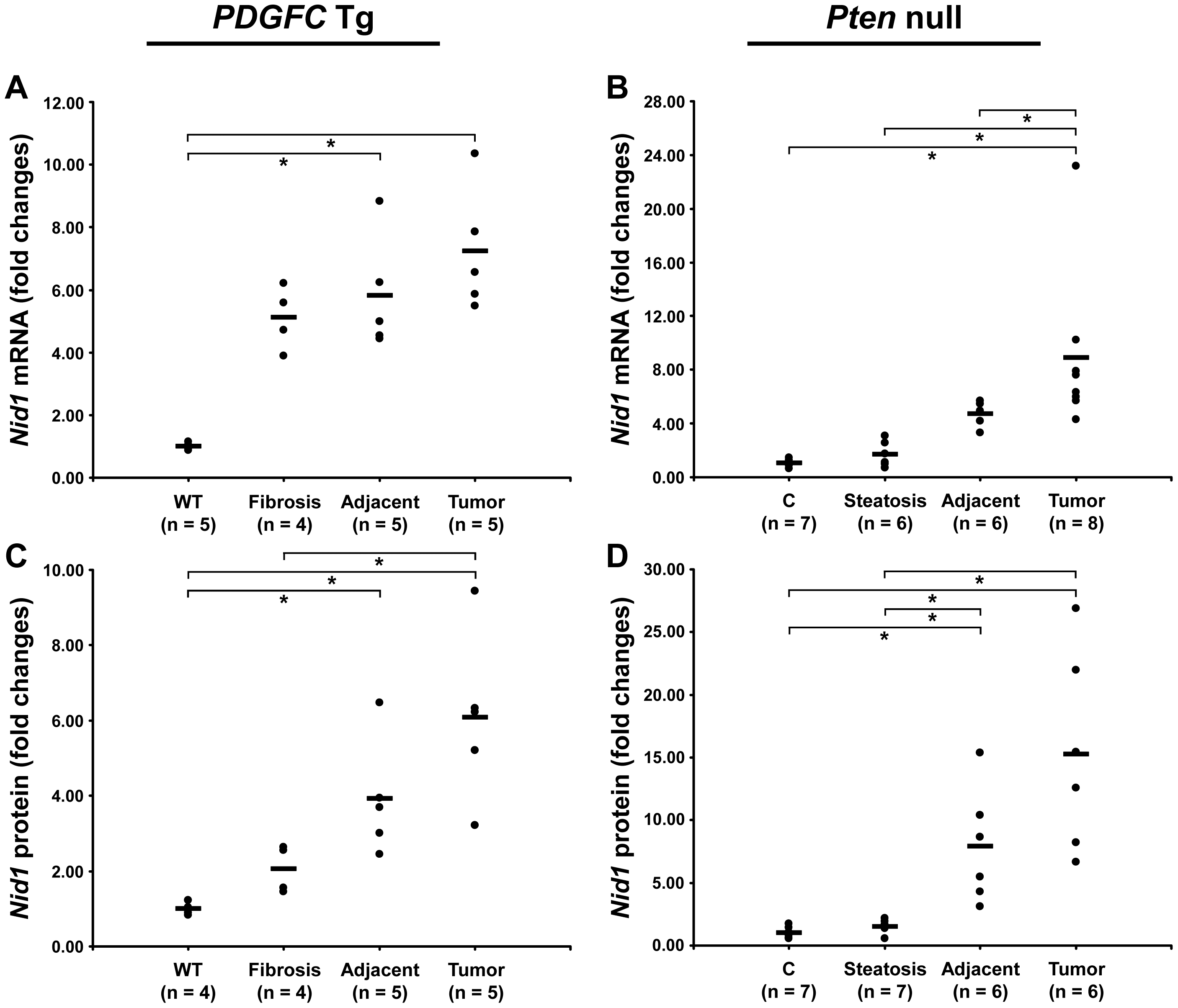 Up-regulation of nidogen 1 mRNA and protein in <i>PDGFC</i> Tg and <i>Pten</i> null tumors.