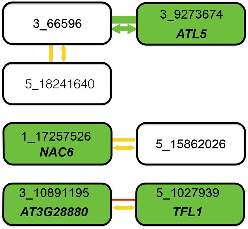 Summary of combined statistical and functional support for loci underlying root length.